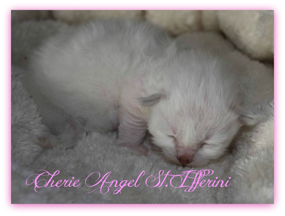 angel-2a