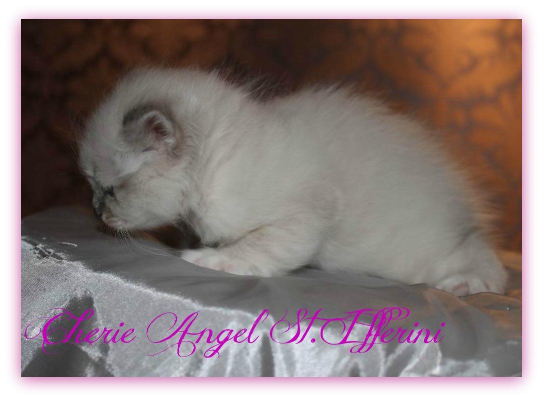 angel12a