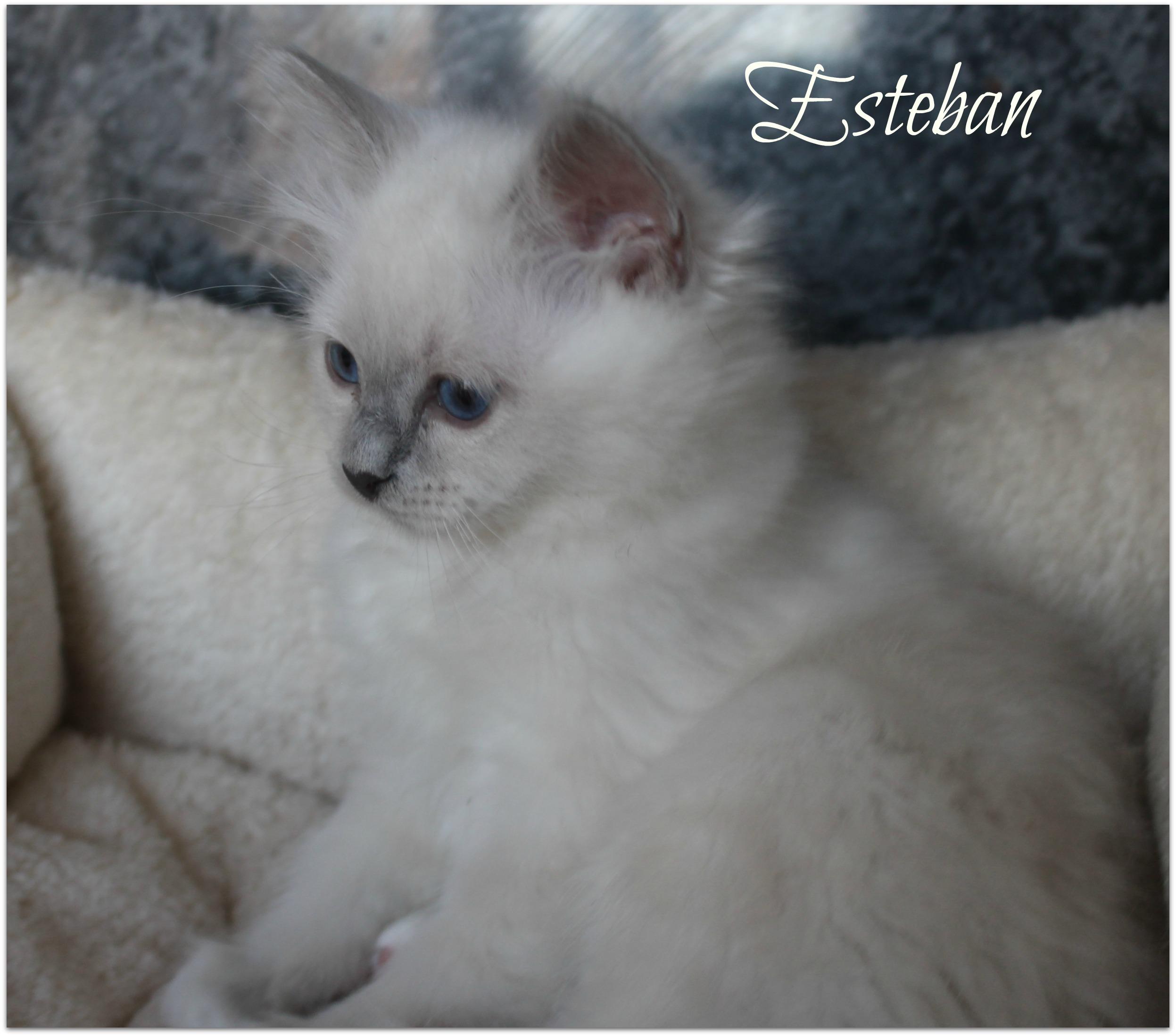esteban1_0