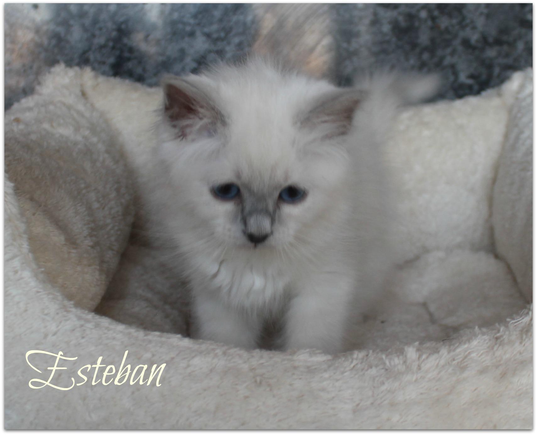 esteban2_0