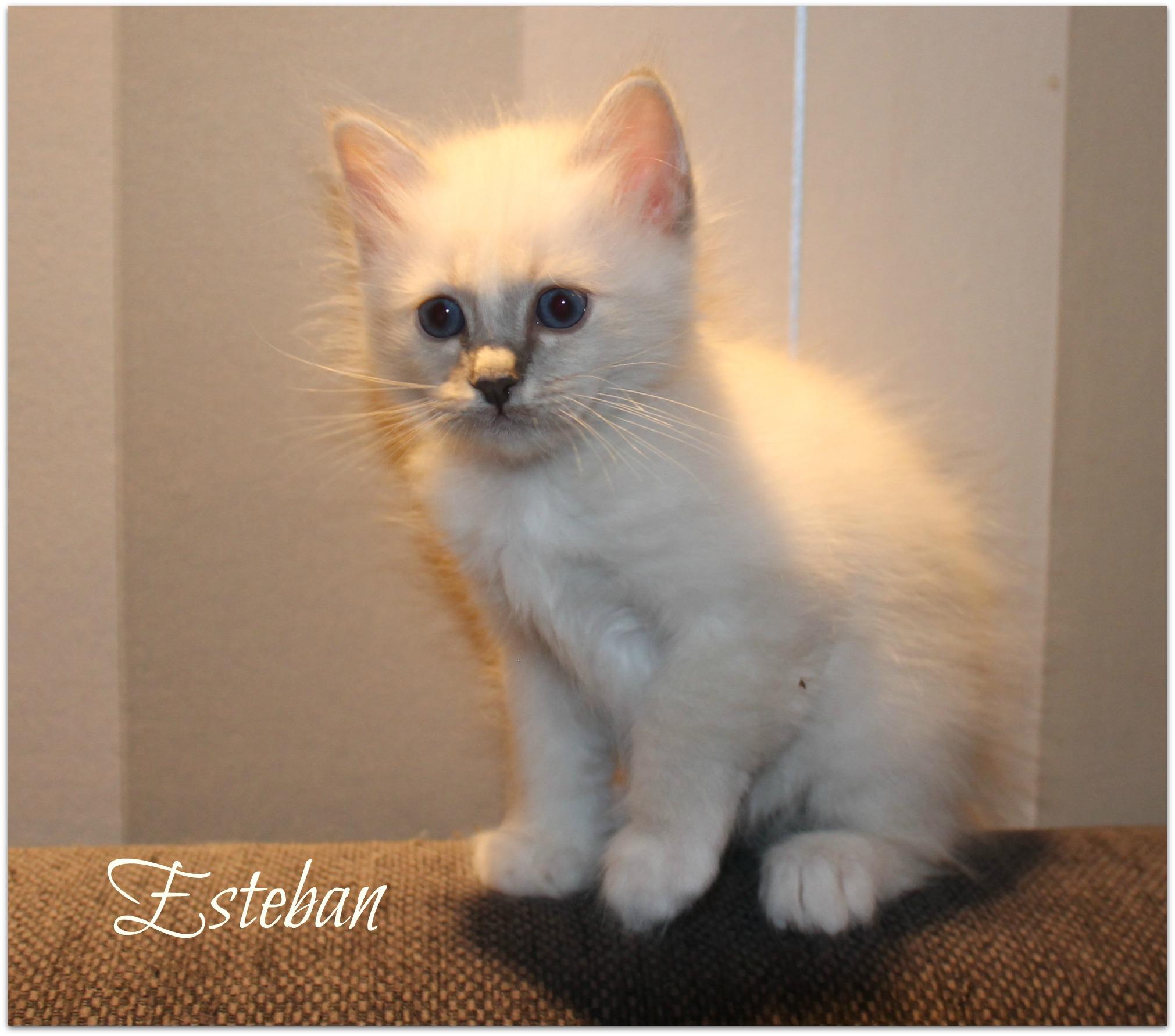 esteban_0