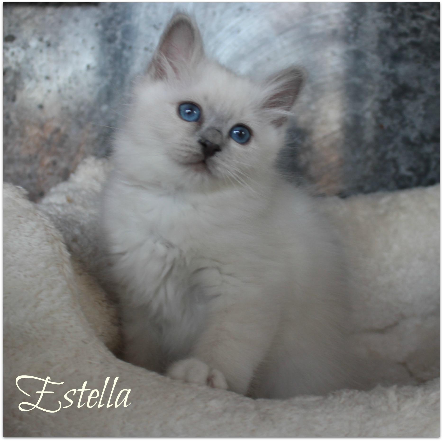 estella1