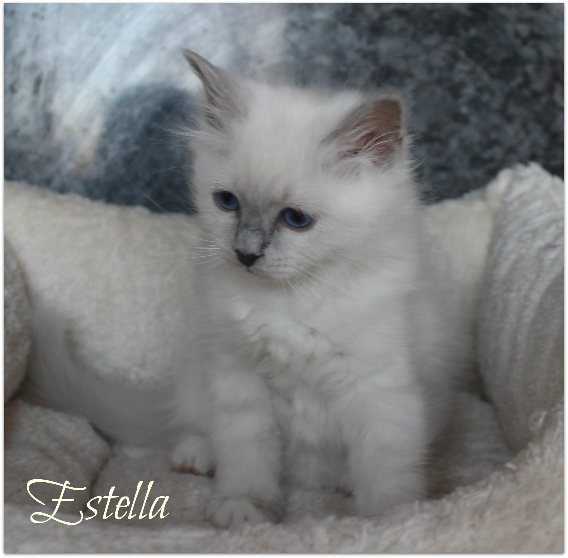 estella2