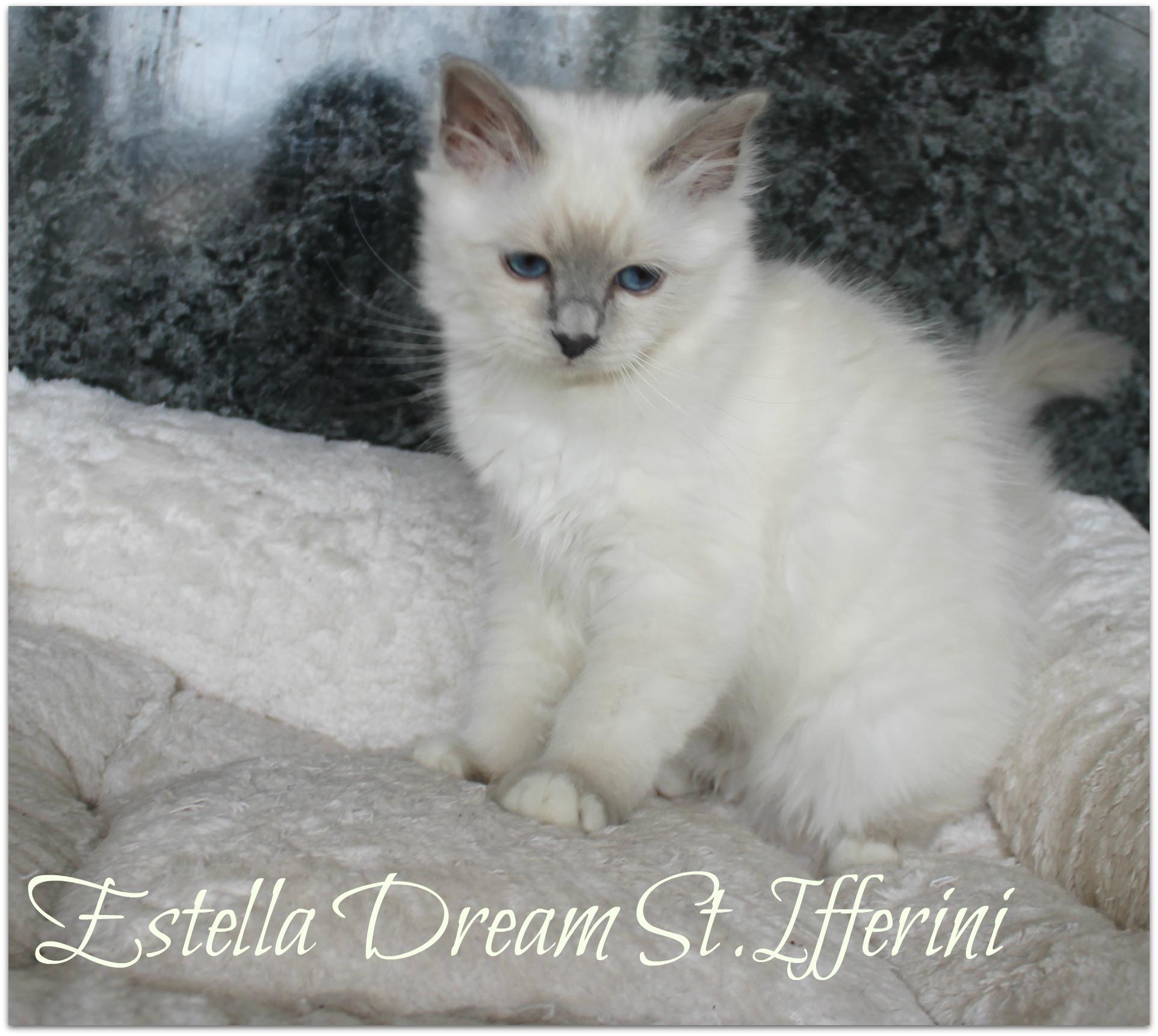 estella2_1