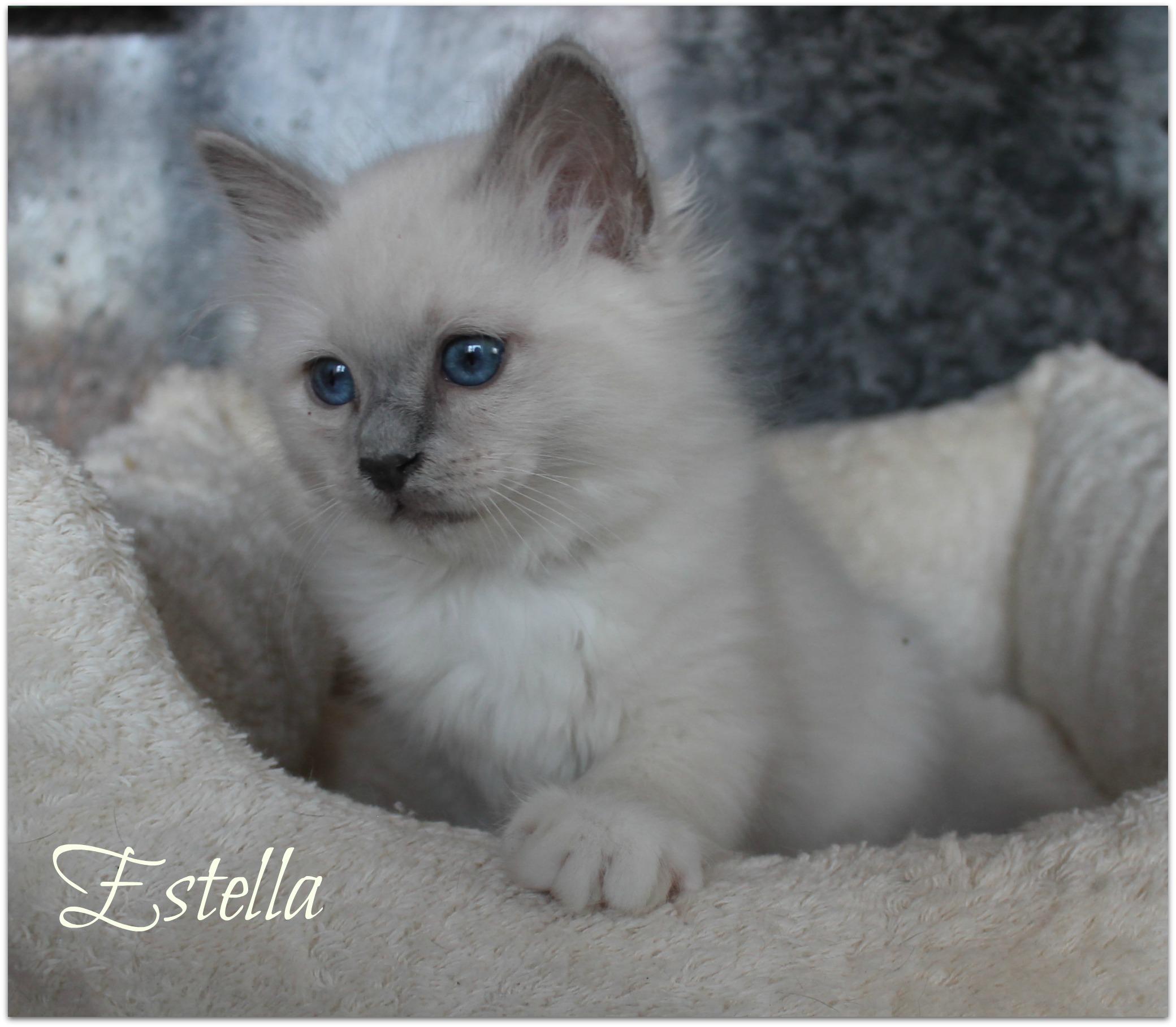 estella3
