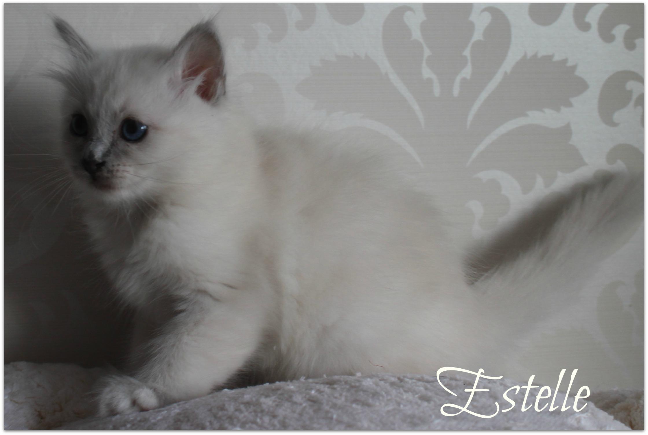 estelle1