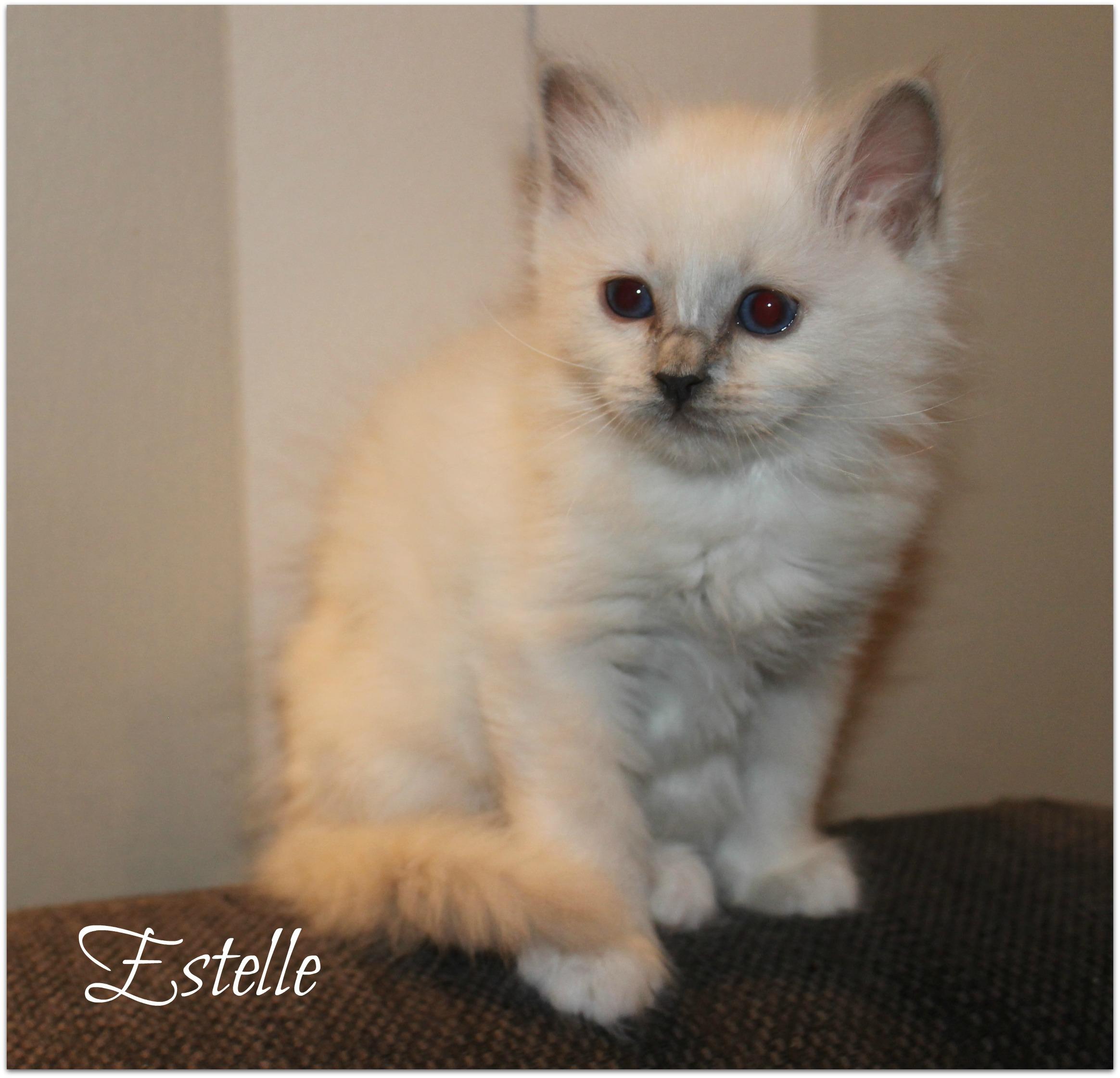 estelle_0