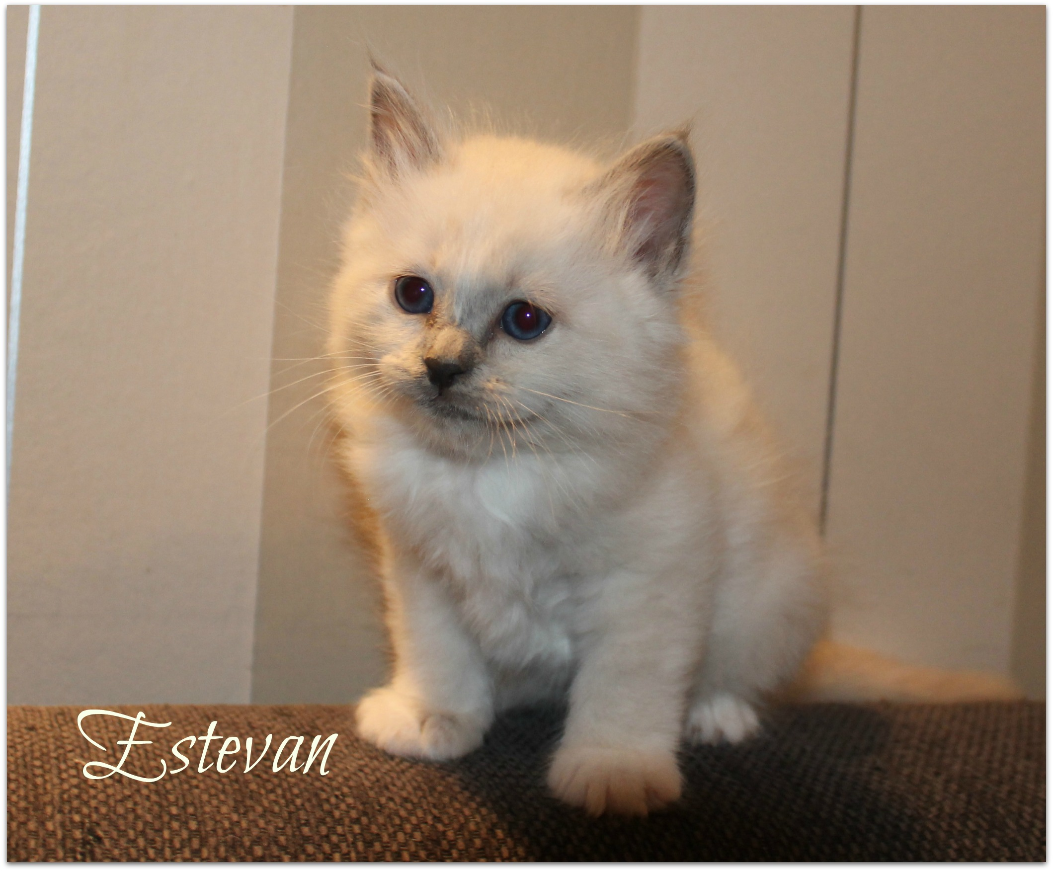 estevan_0
