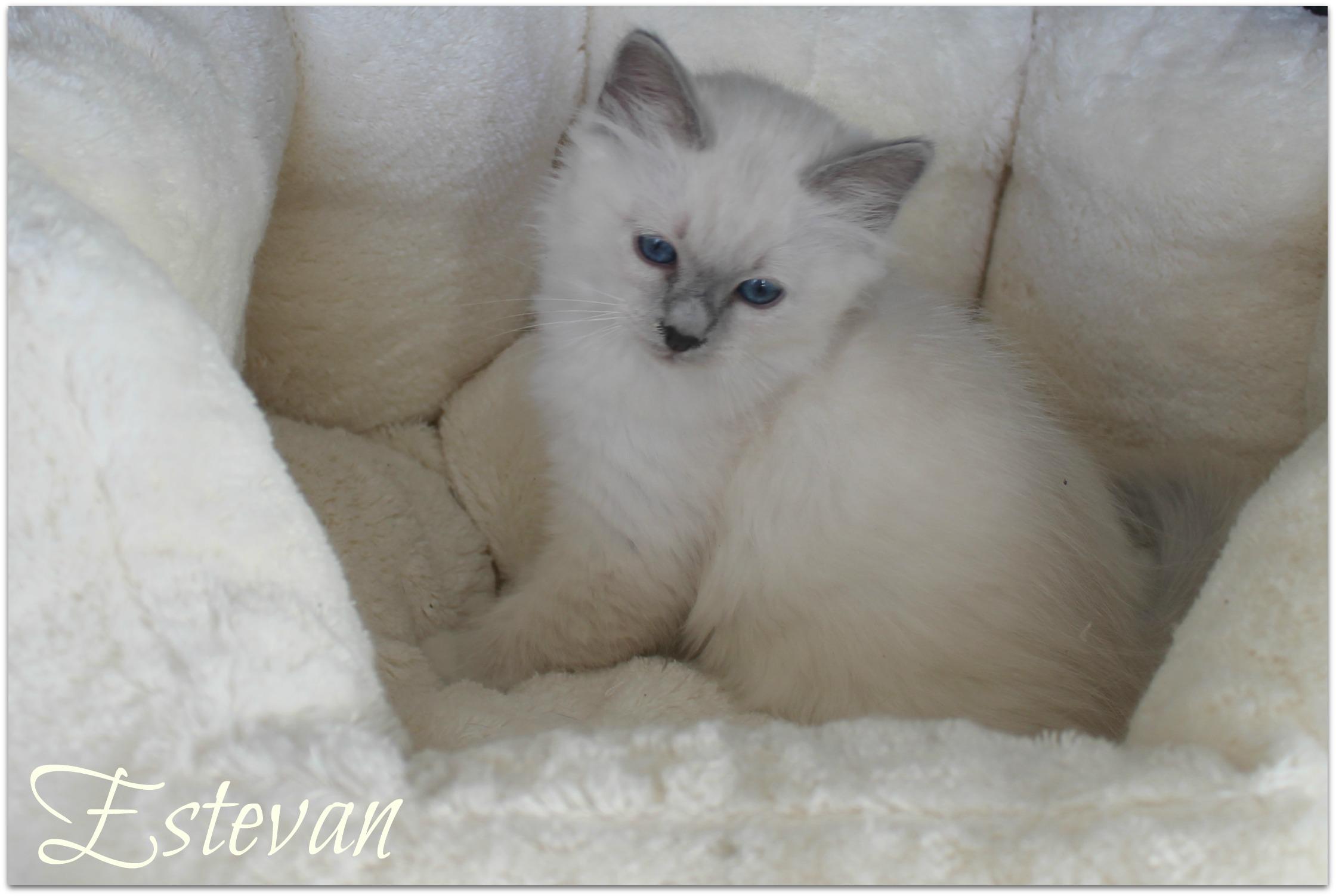 estevan_1