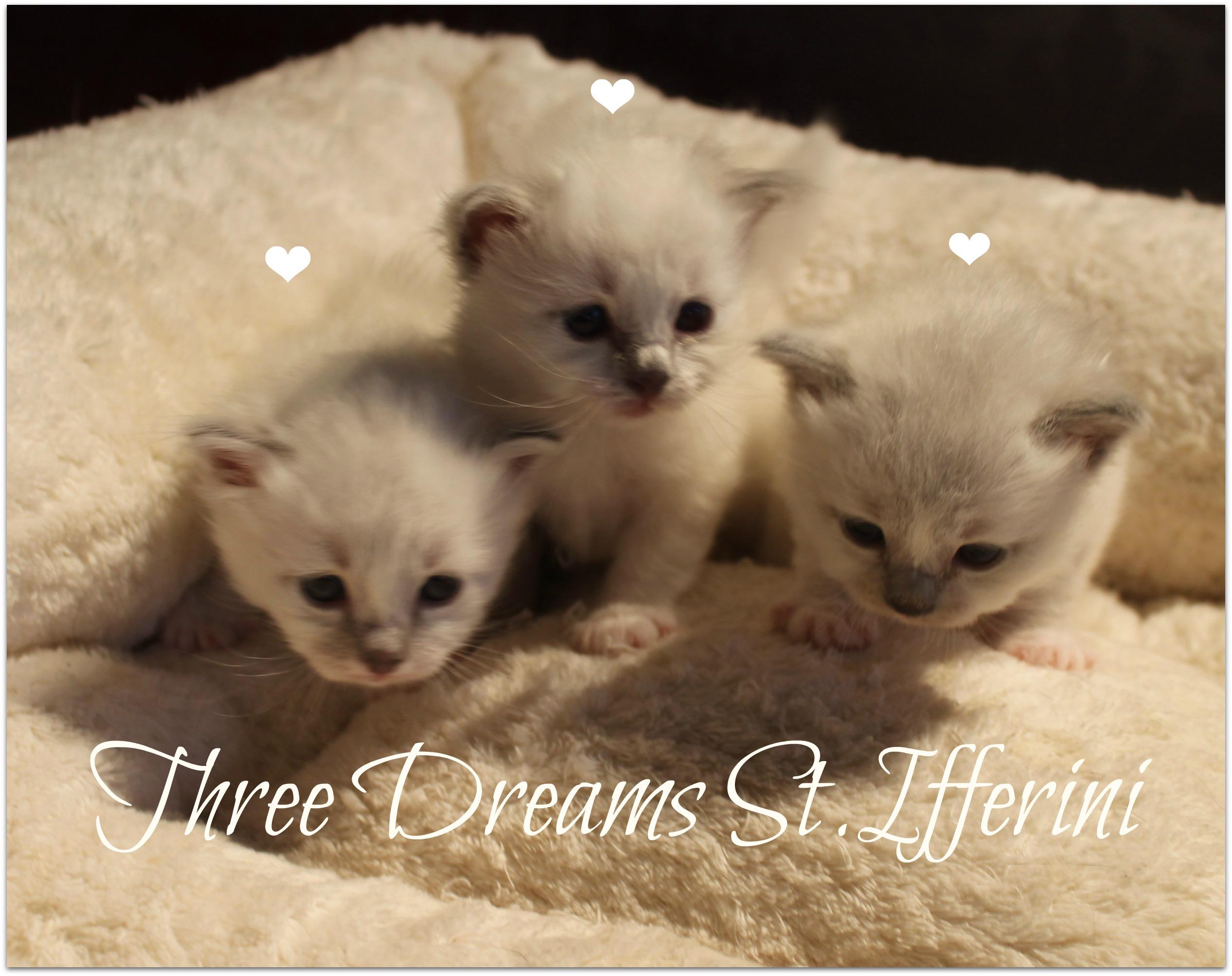 kolm3