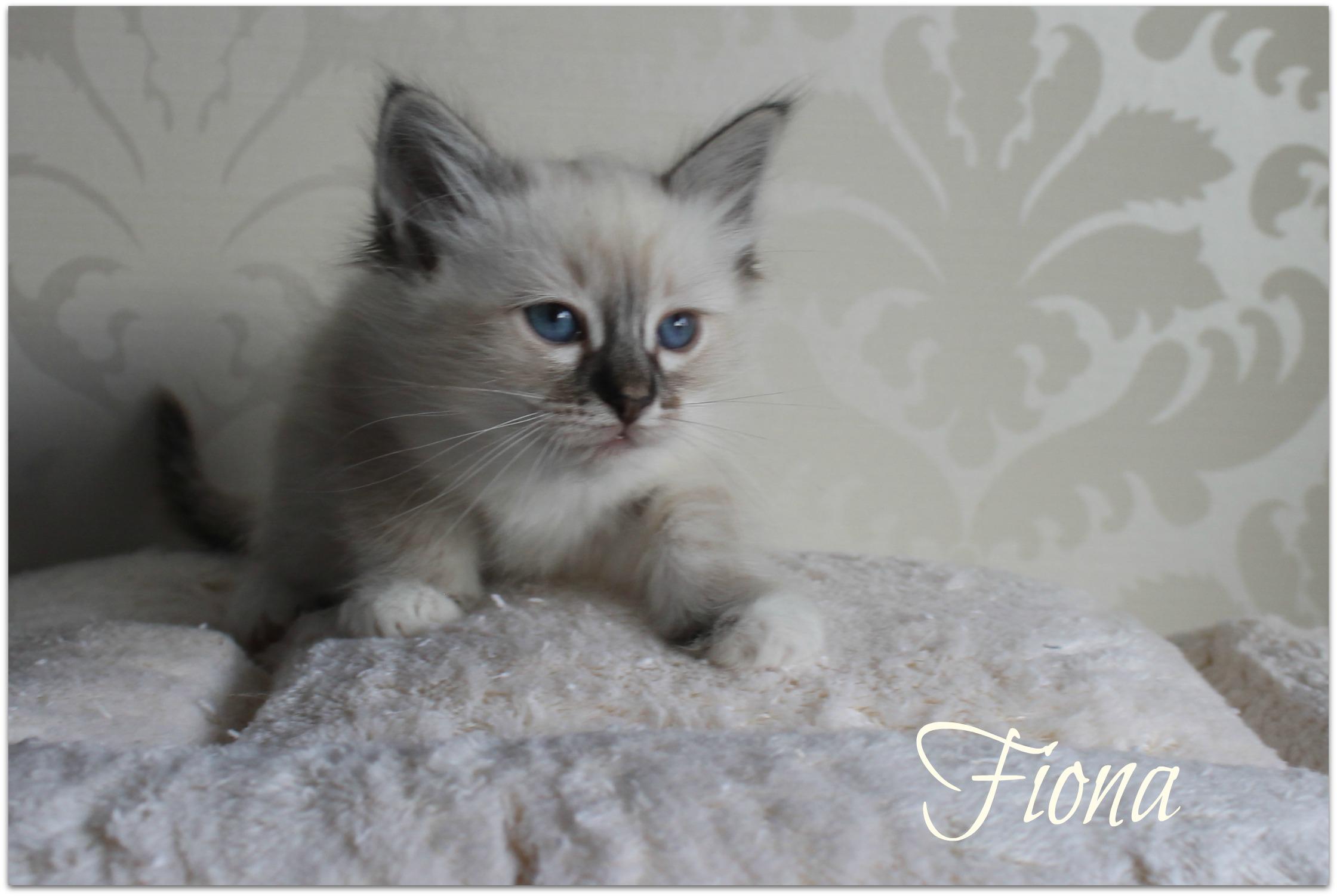 fiona2