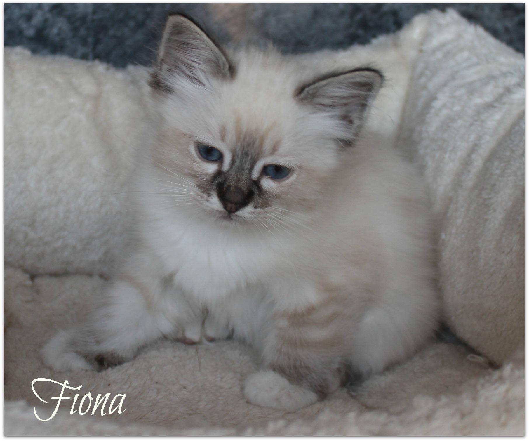 fiona2_0