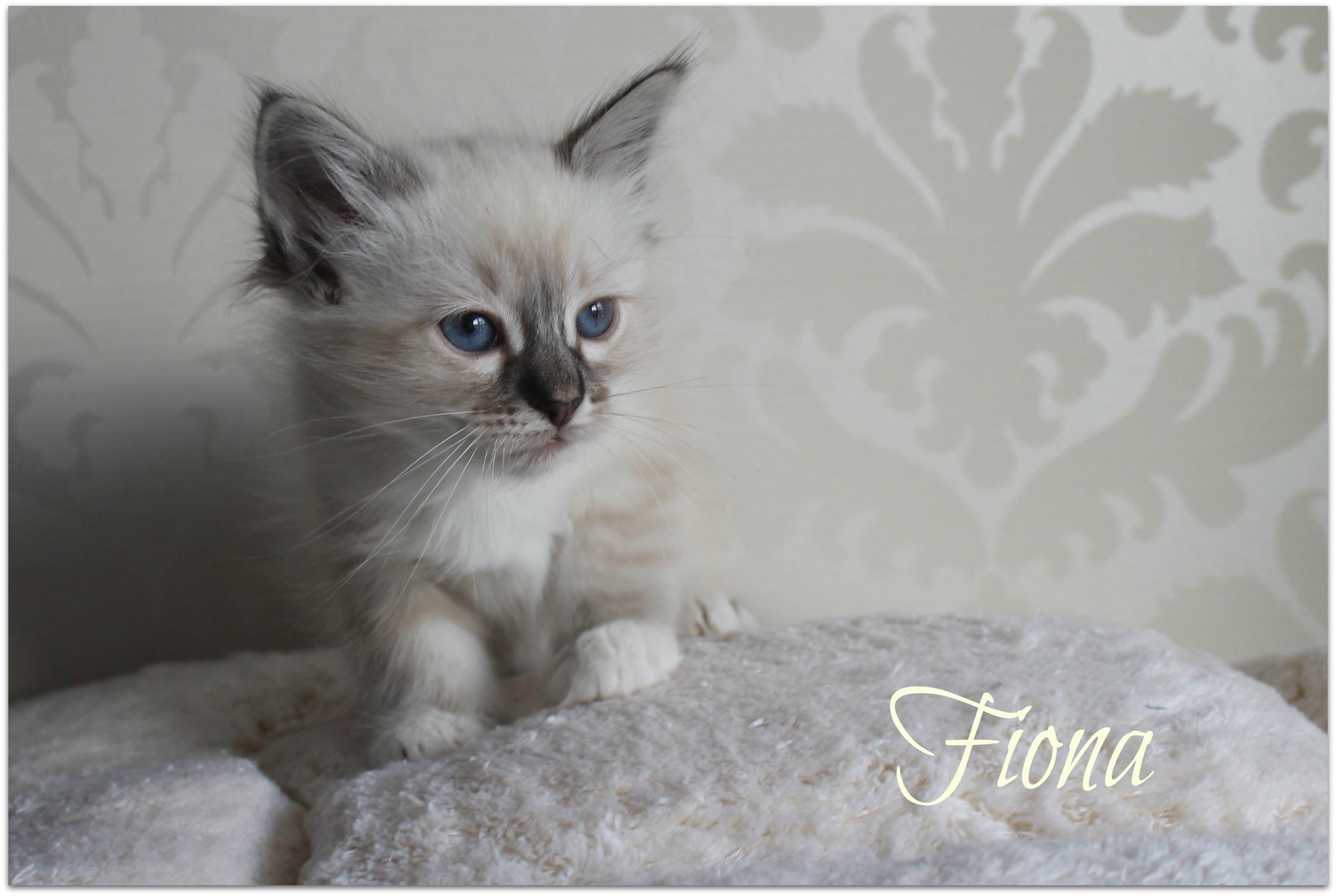 fiona3