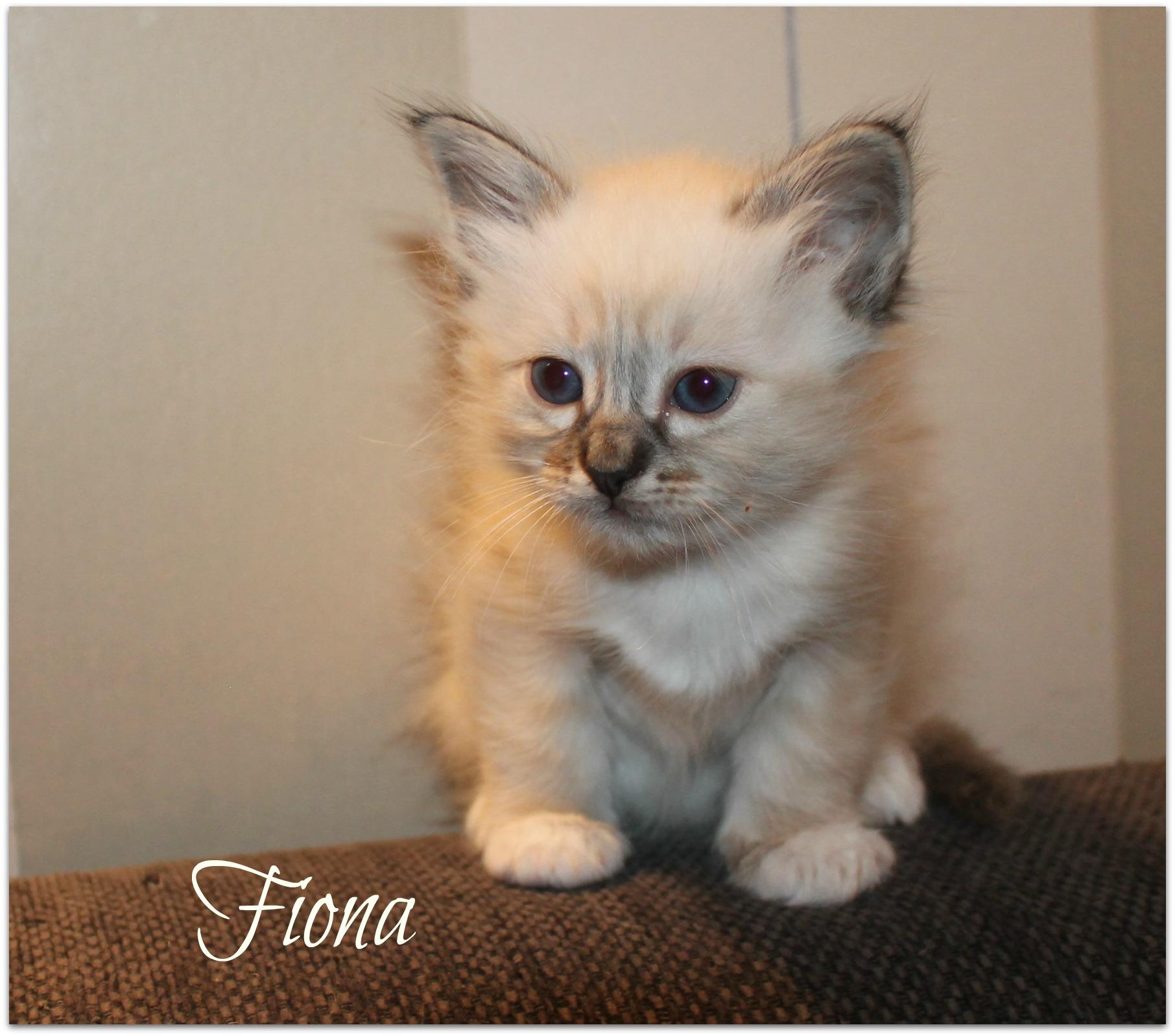 fiona_0