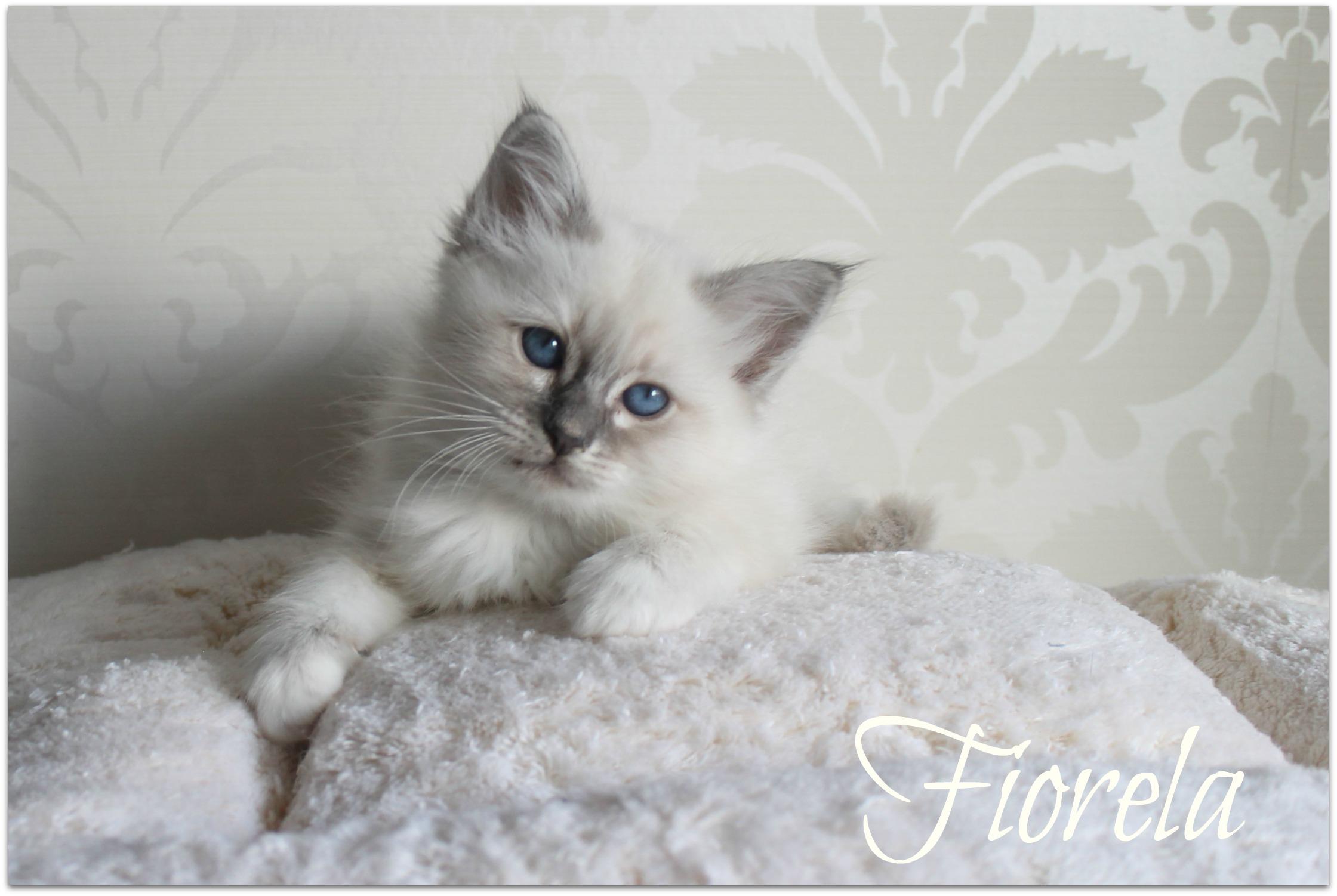 fiorela1