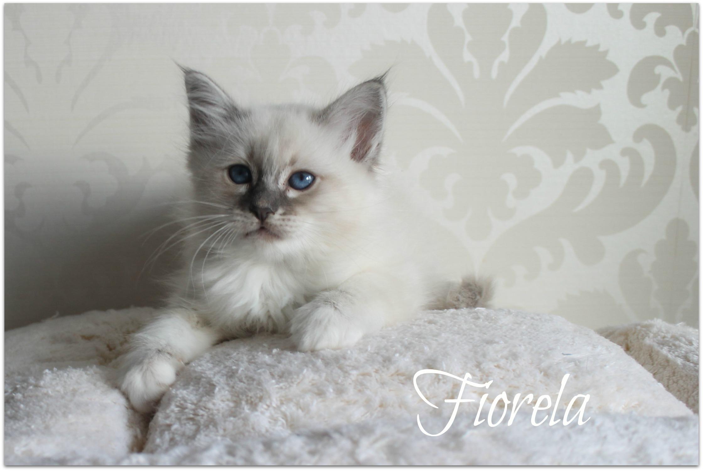 fiorela2