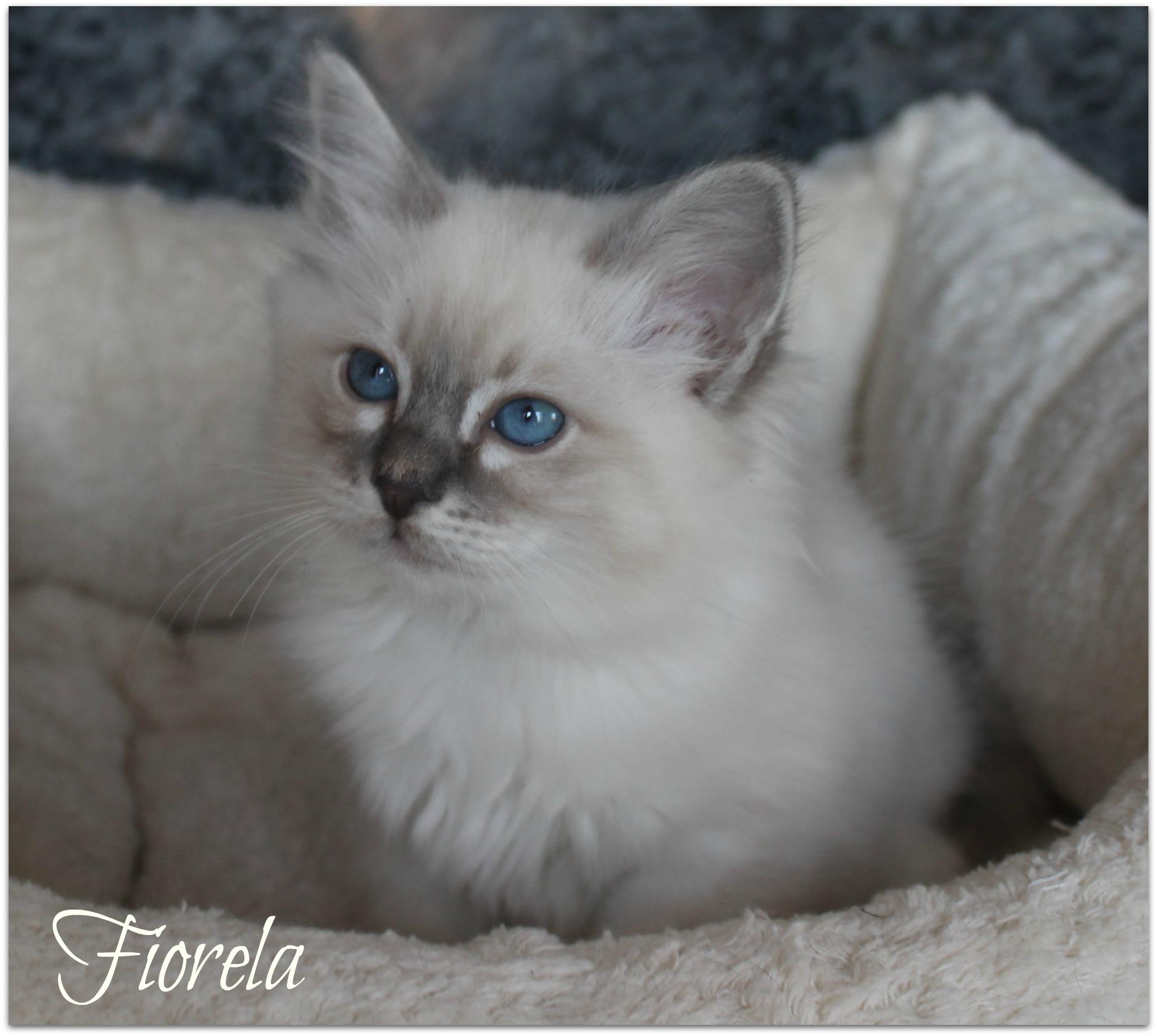 fiorela2_0