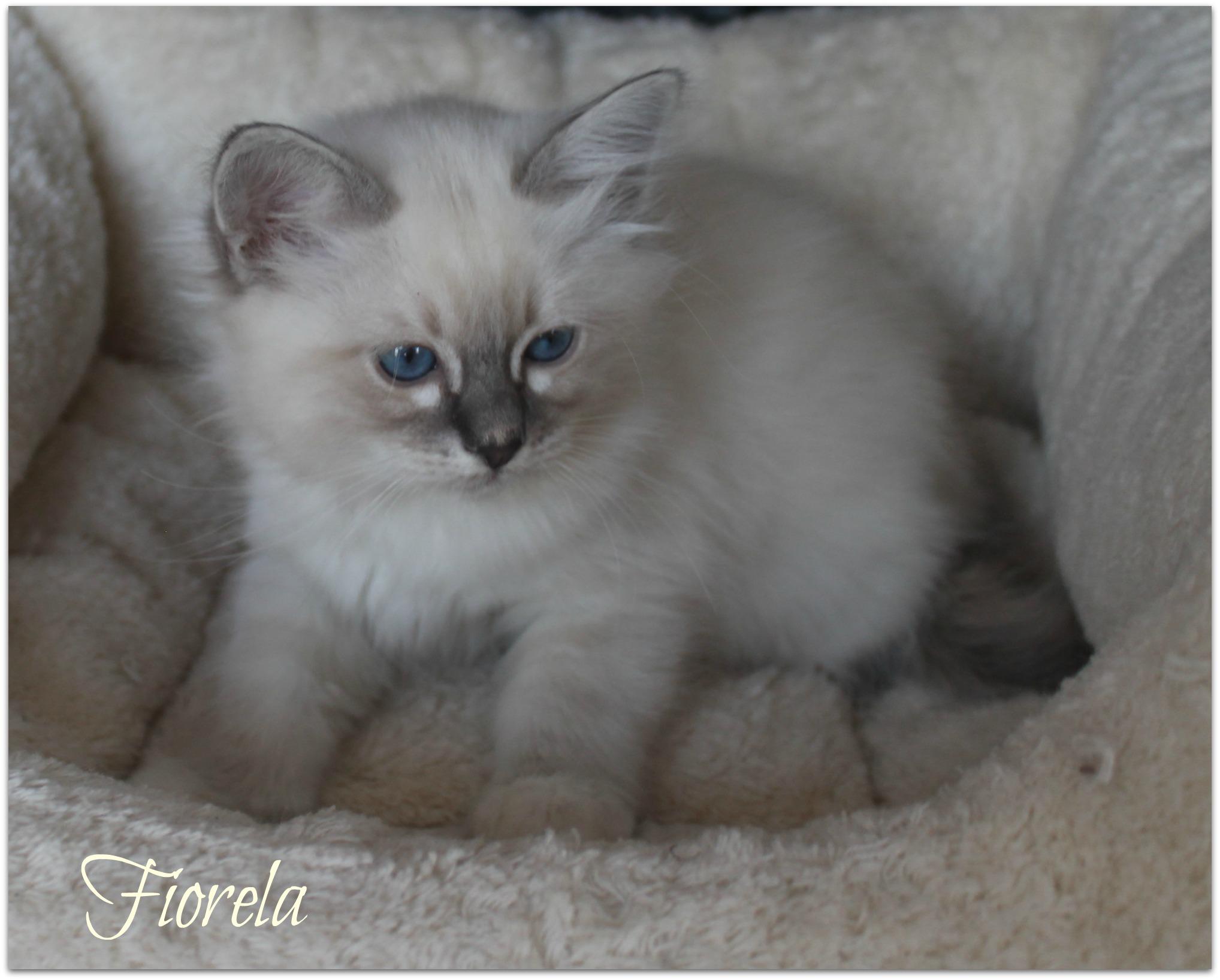 fiorela3