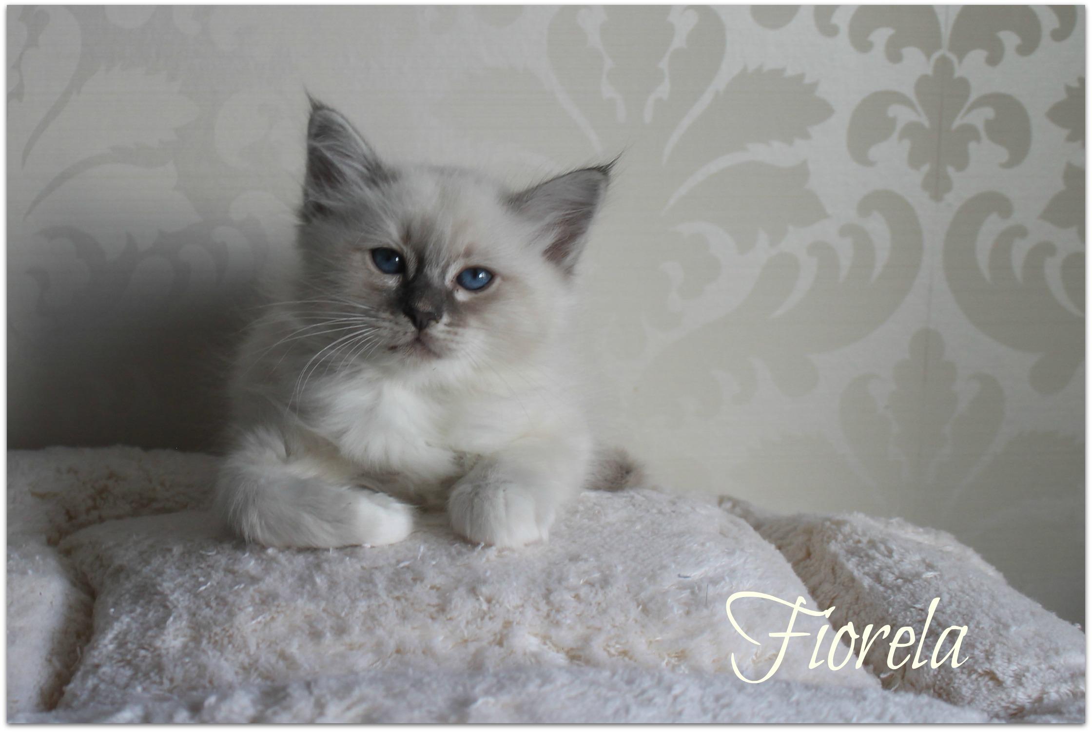fiorela_1