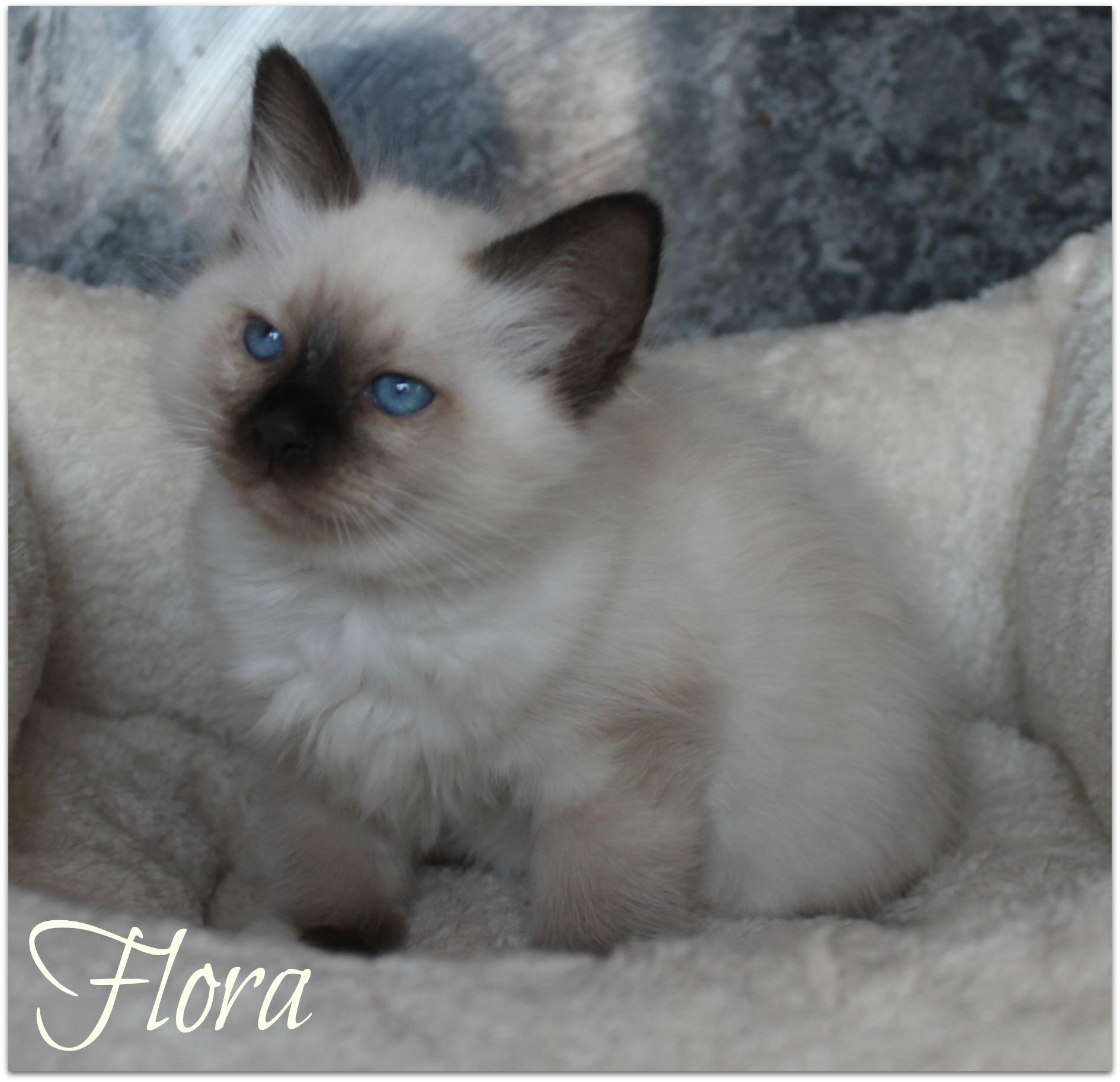 flora1_0