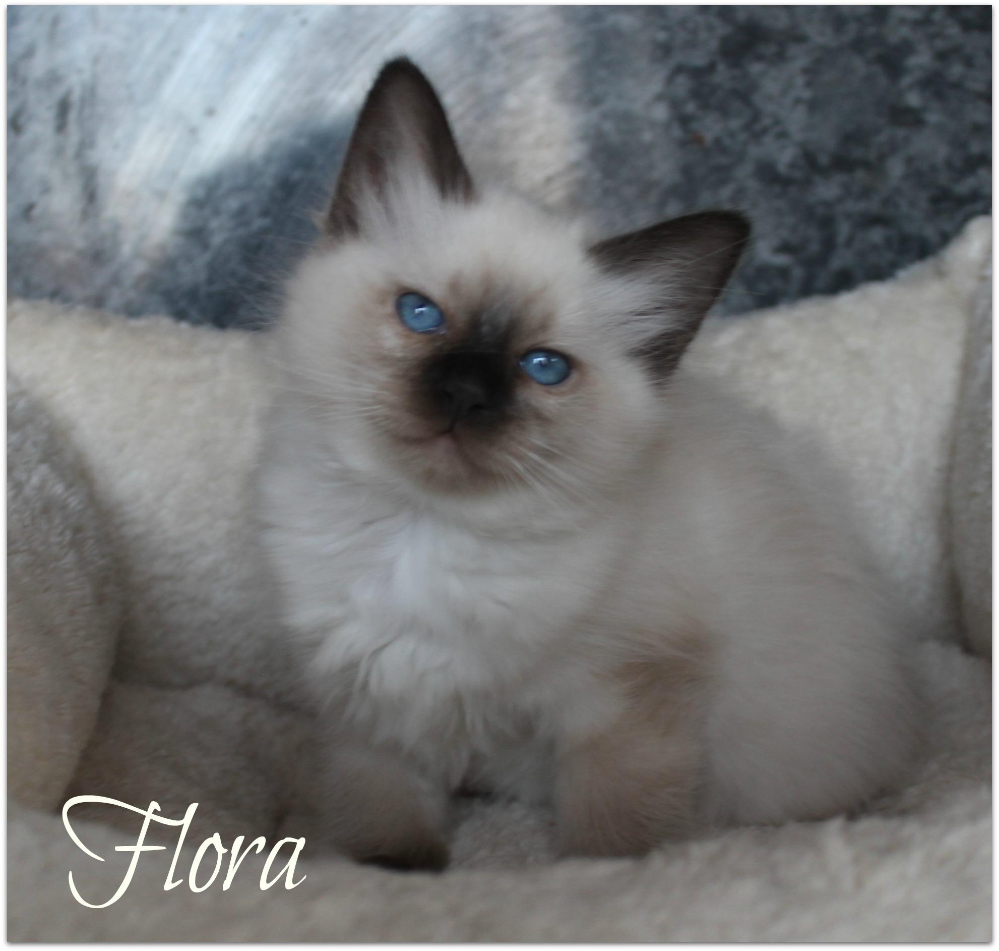 flora2_0