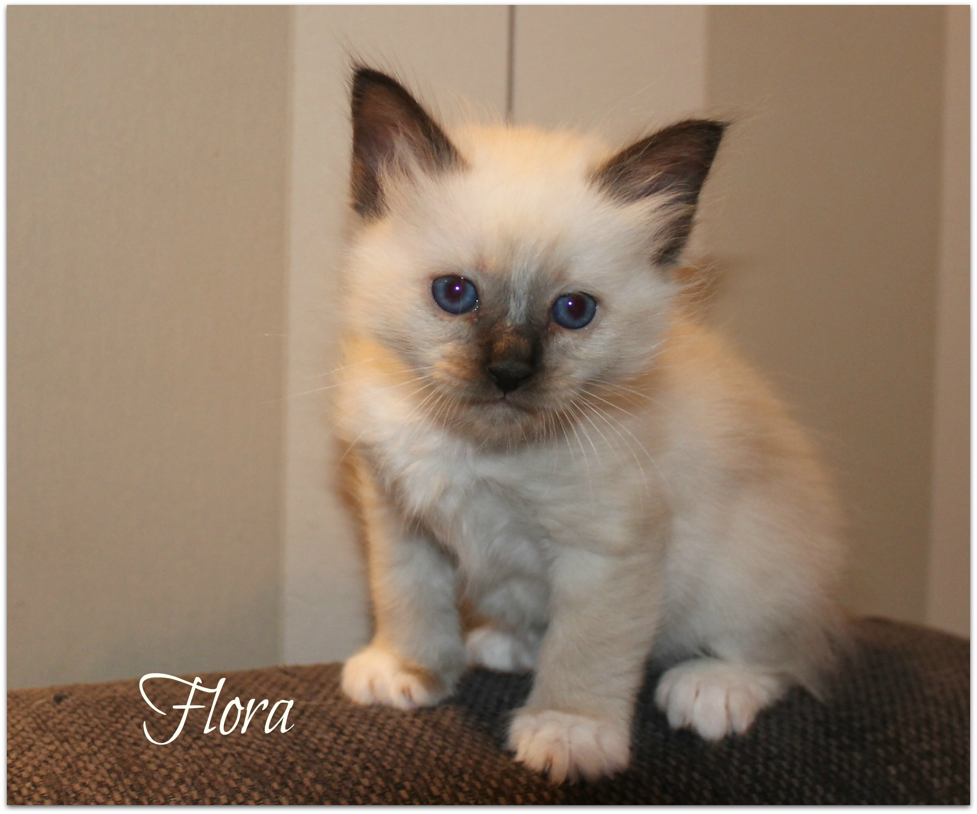 flora_0