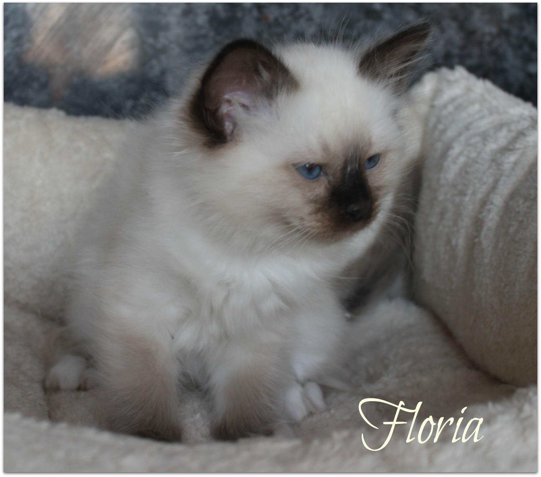 floria1