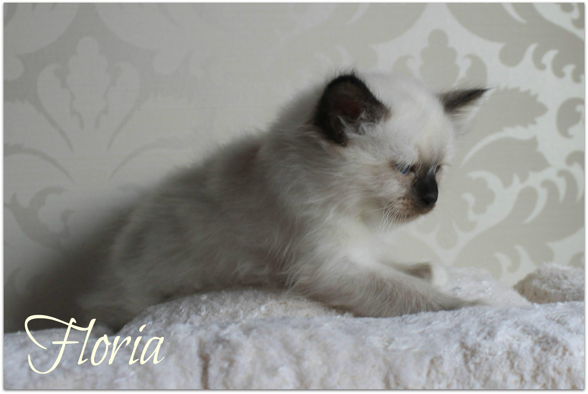 floria11