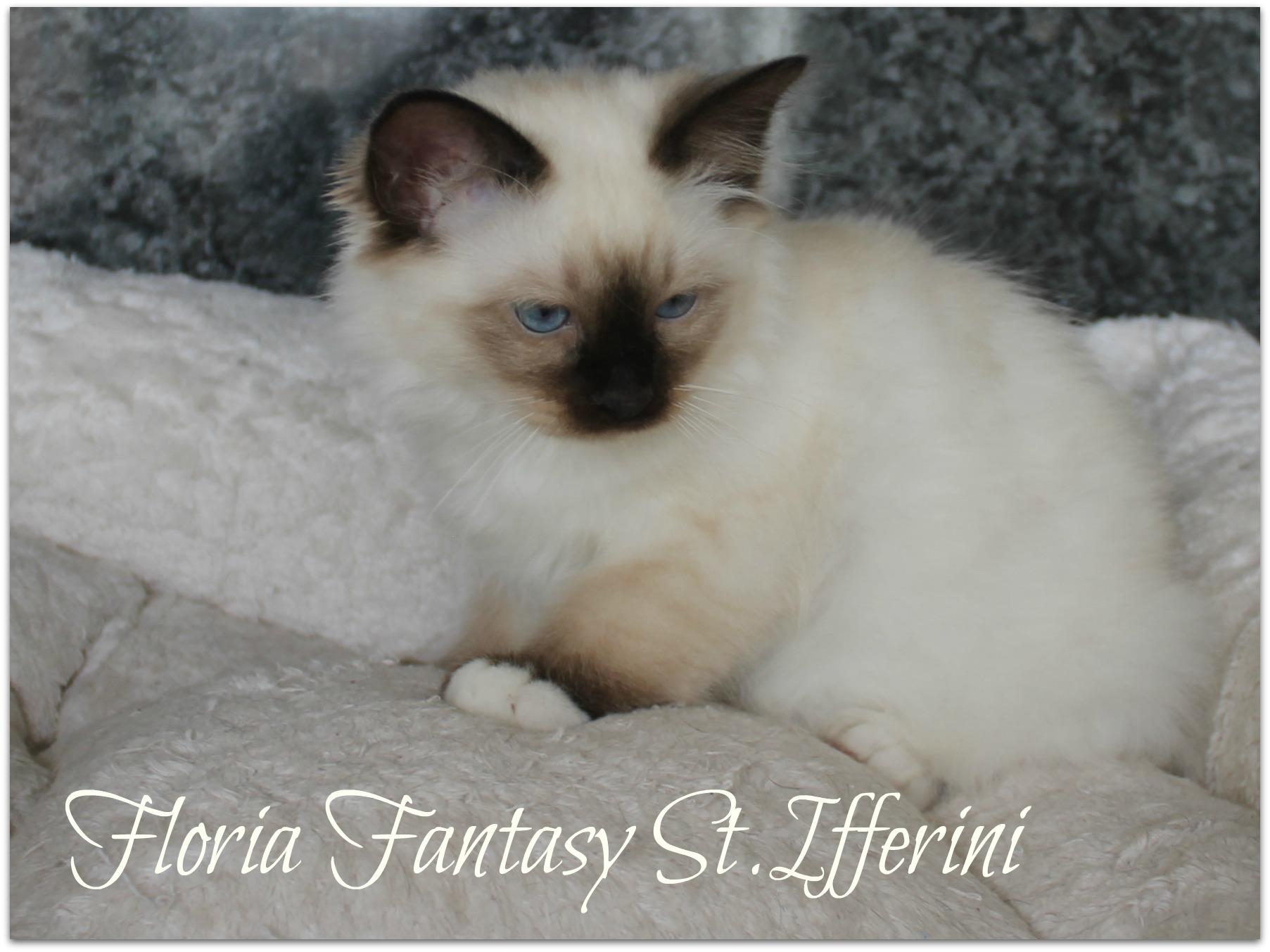 floria1_0