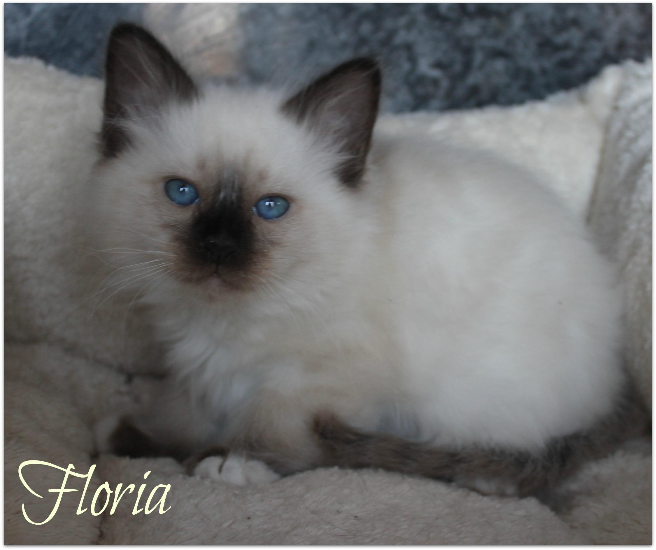 floria2