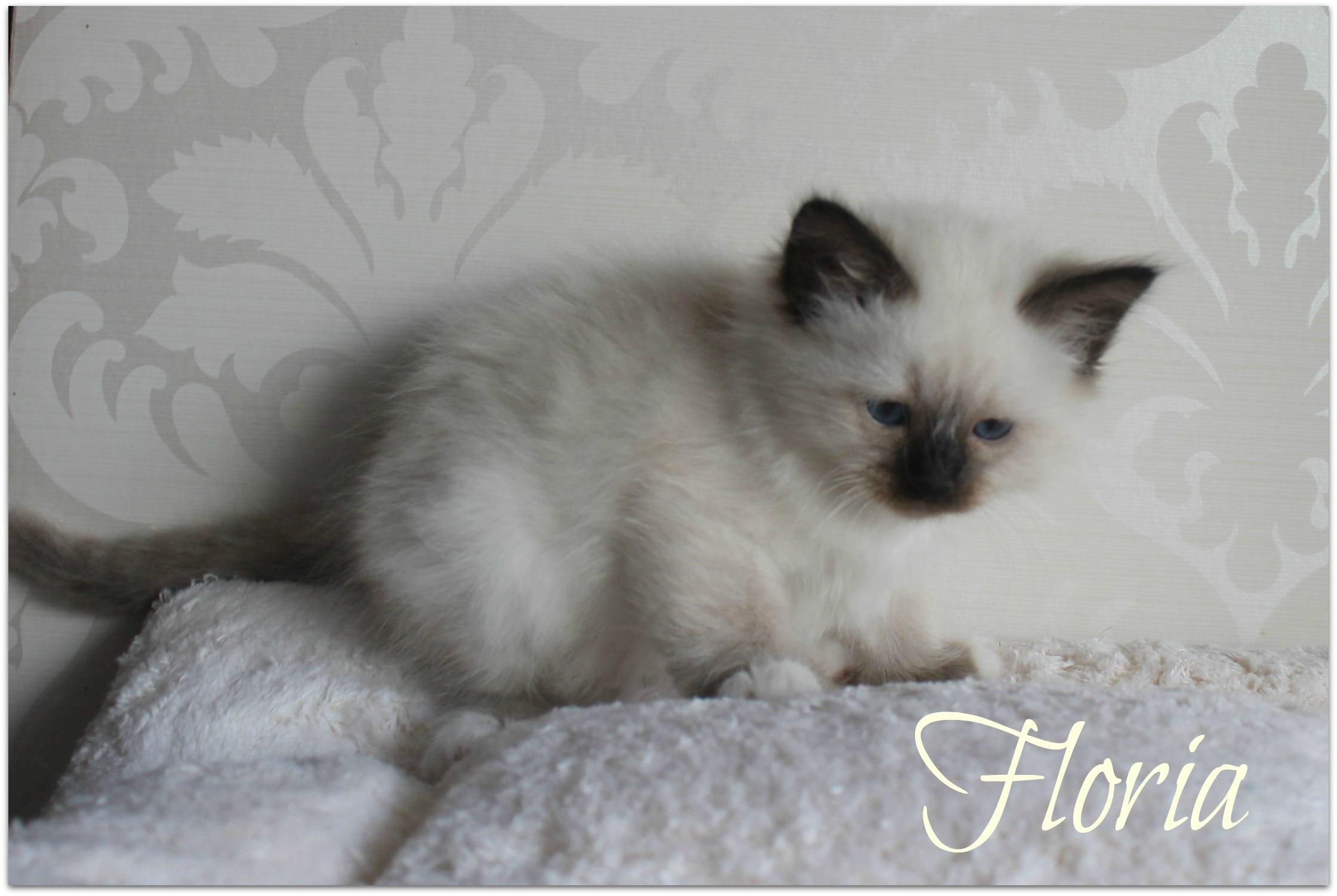 floria22