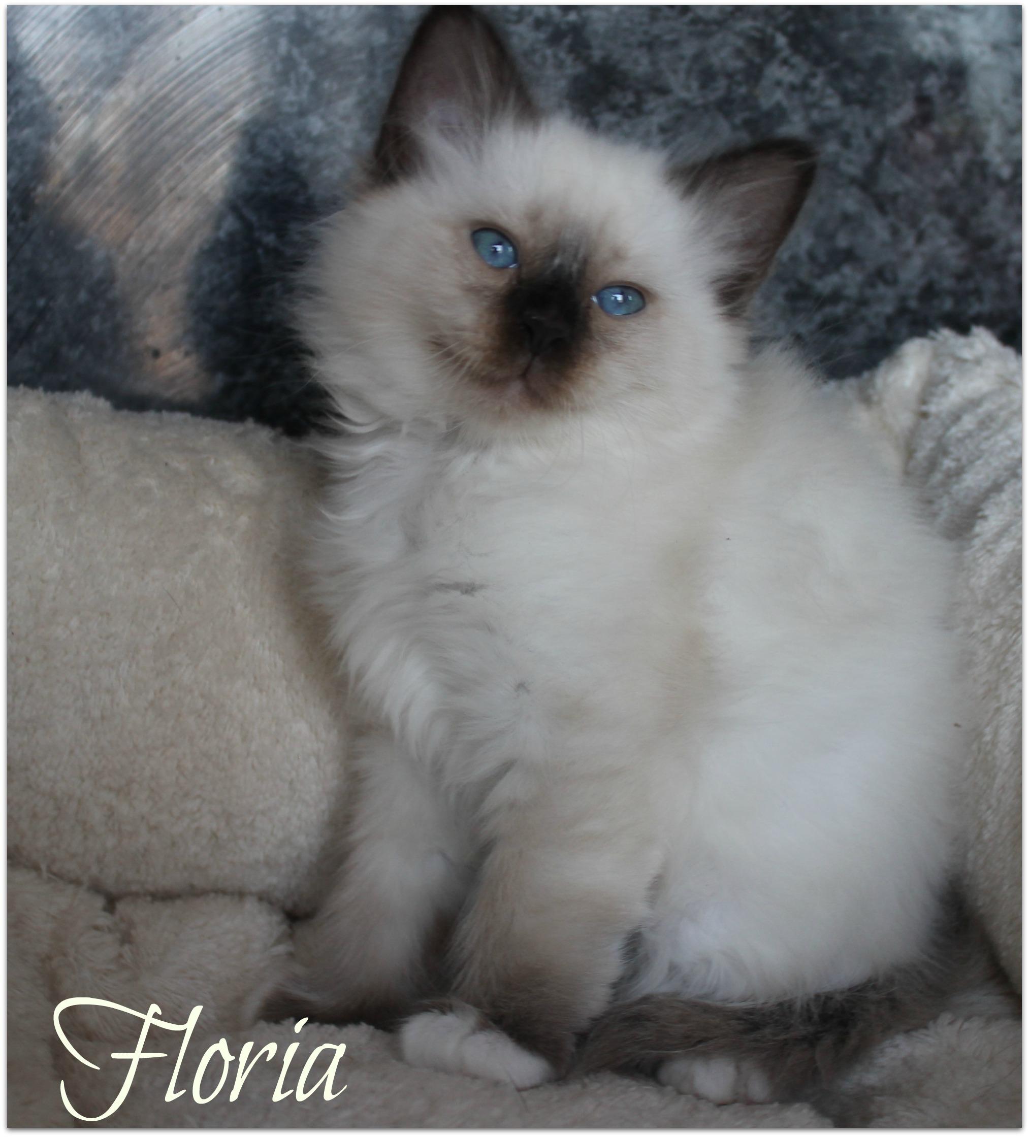 floria3