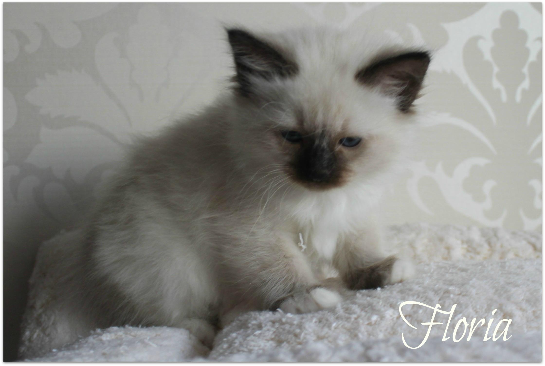 floria33