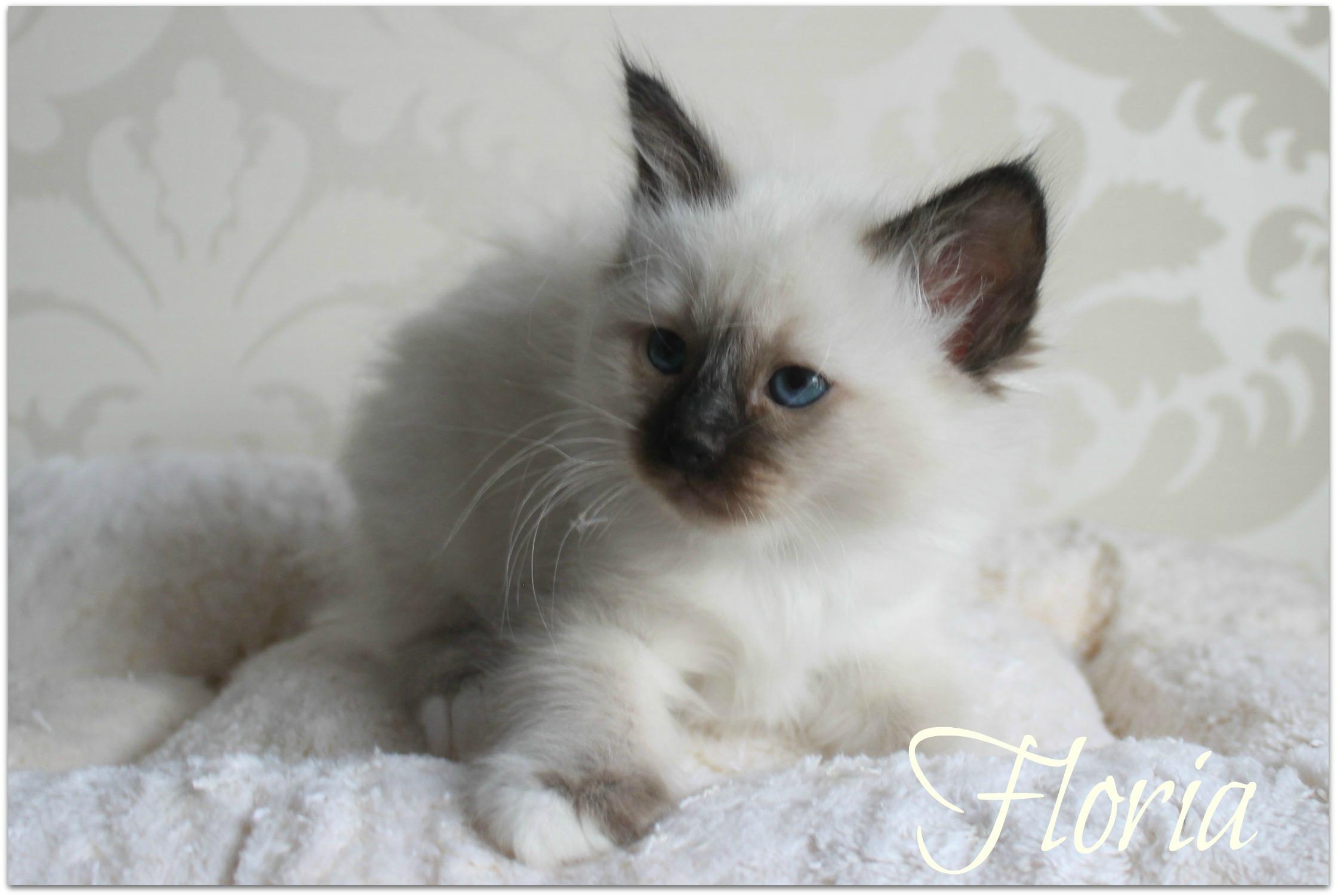floria44