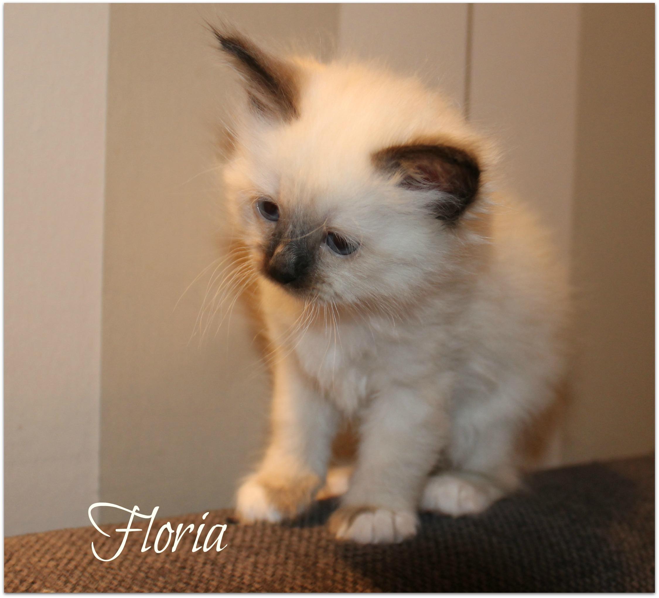 floria_0