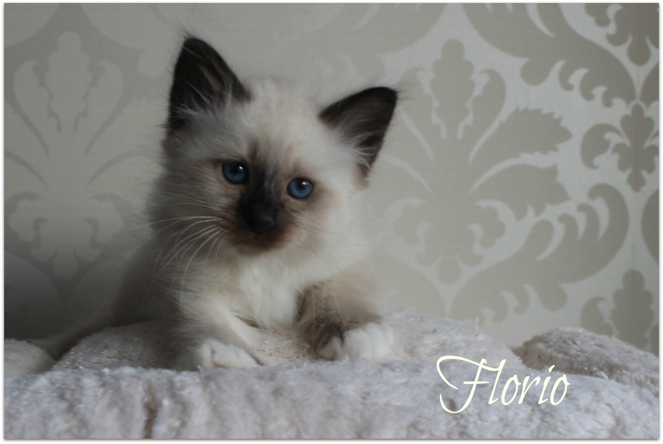 florio1