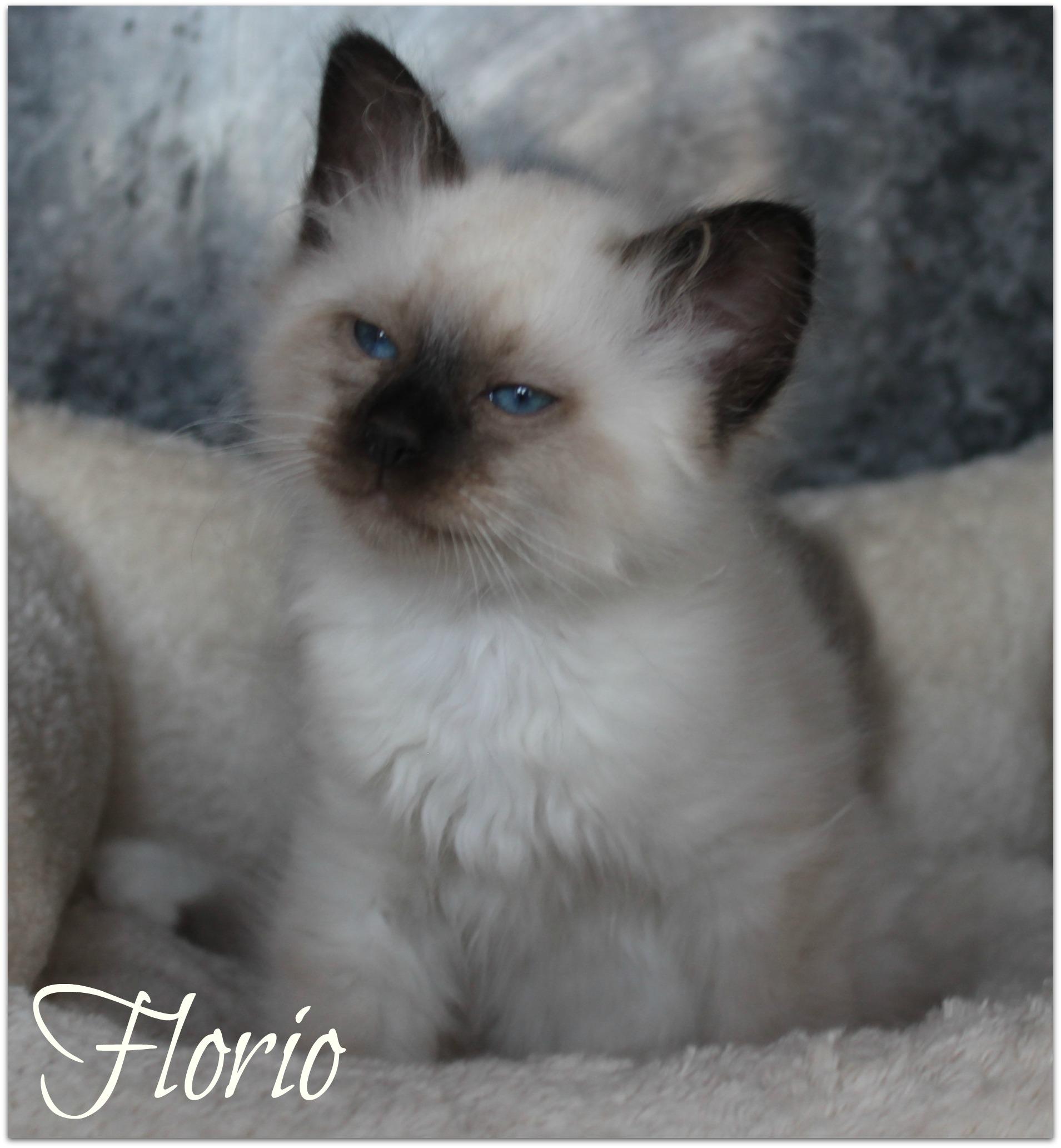 florio1_0