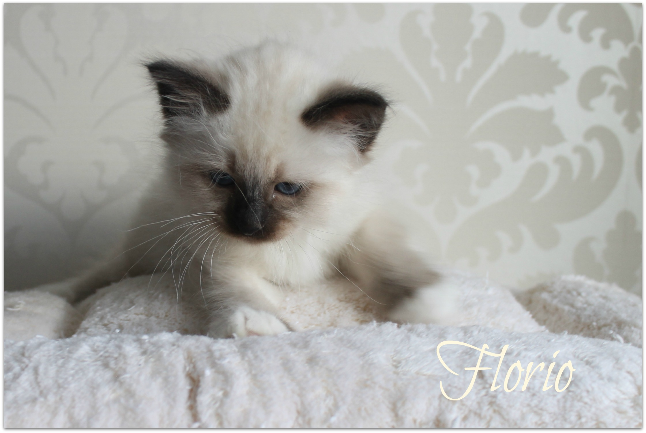 florio2