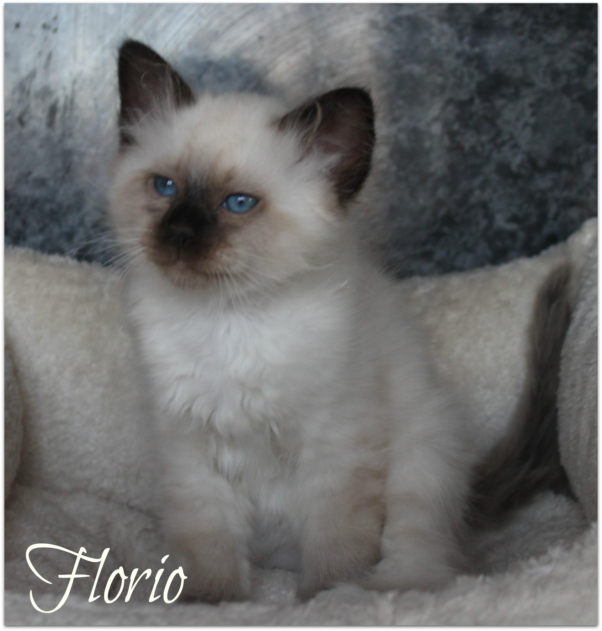 florio2_0