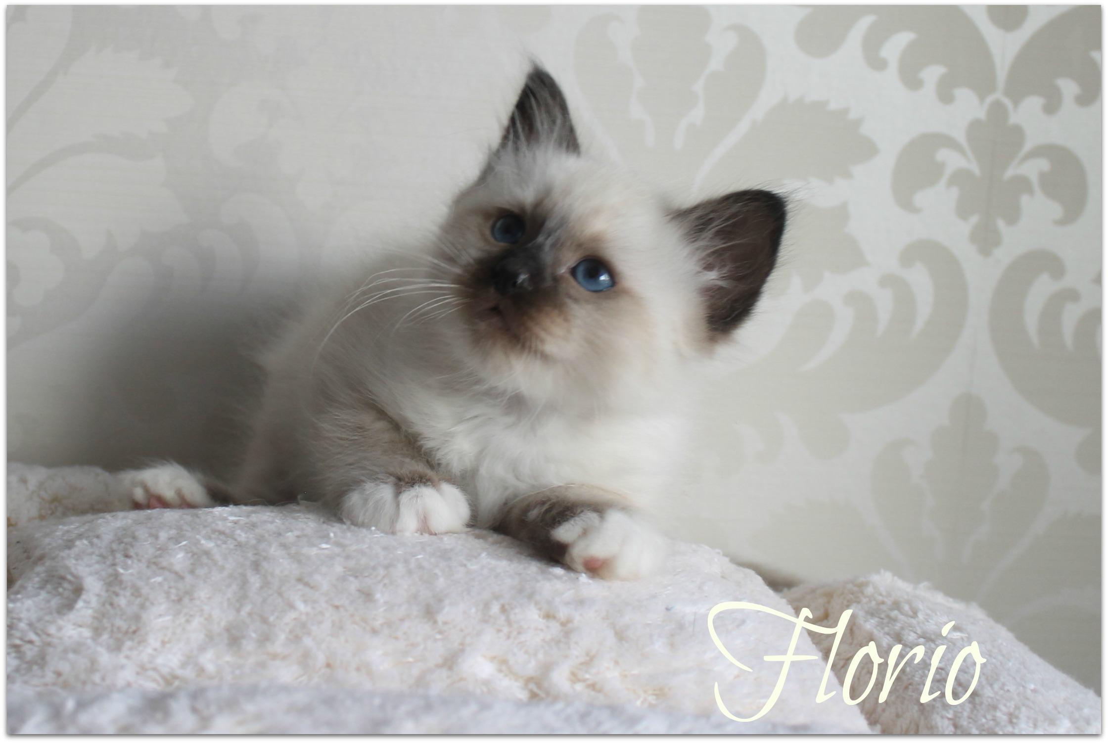 florio3