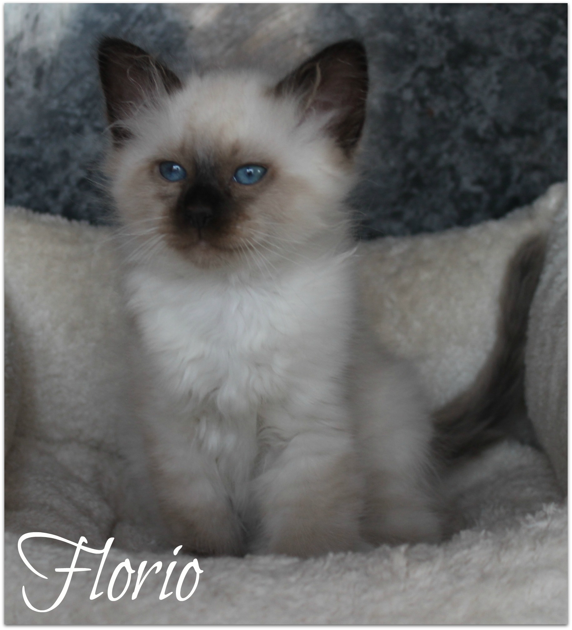 florio3_0
