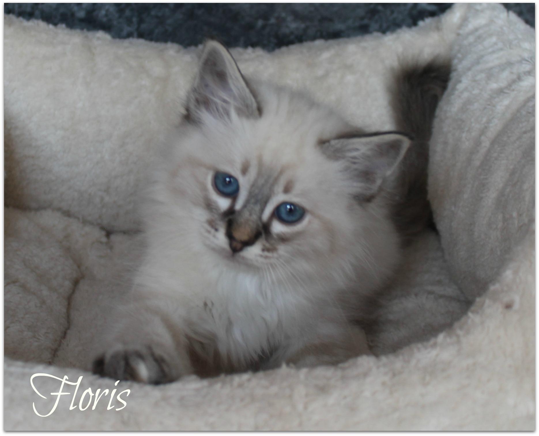 floris2_0