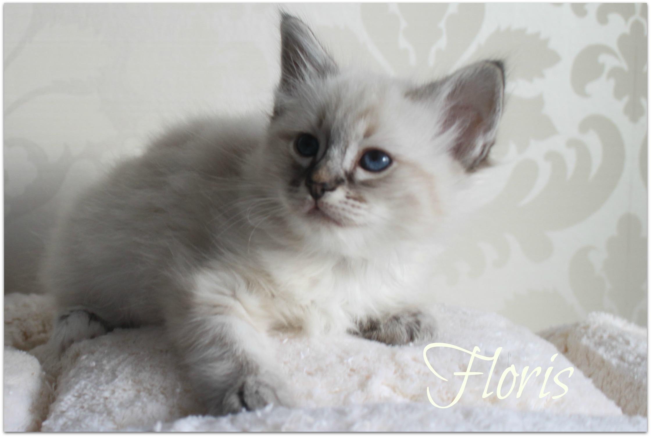 floris3