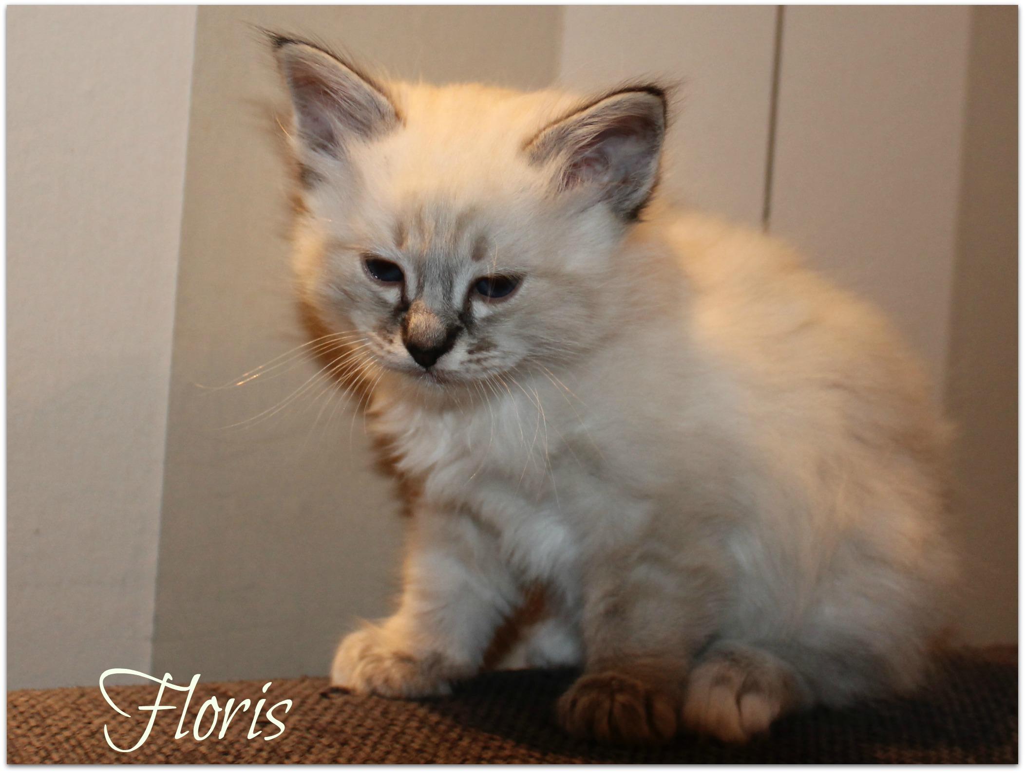 floris_0