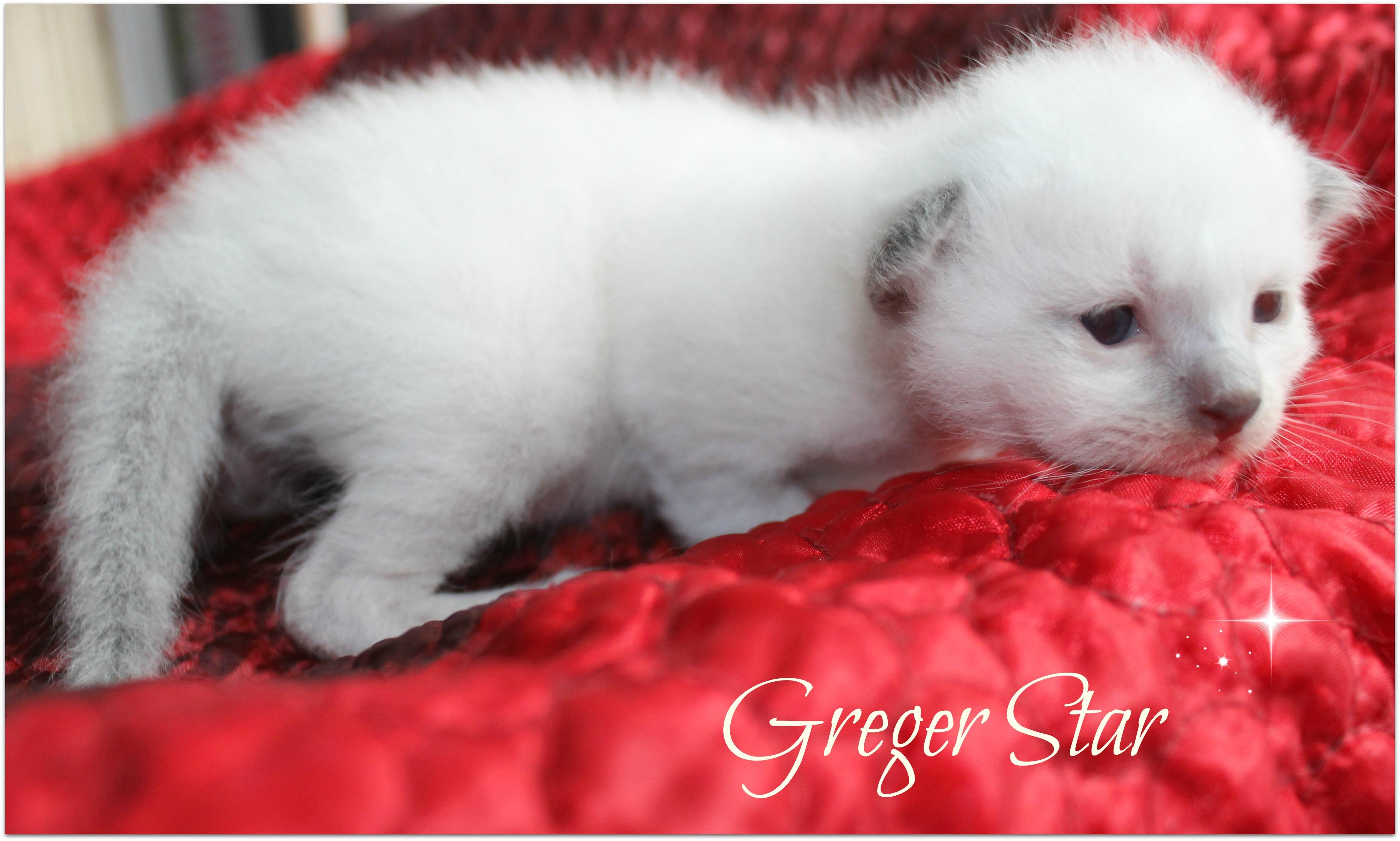 greger2