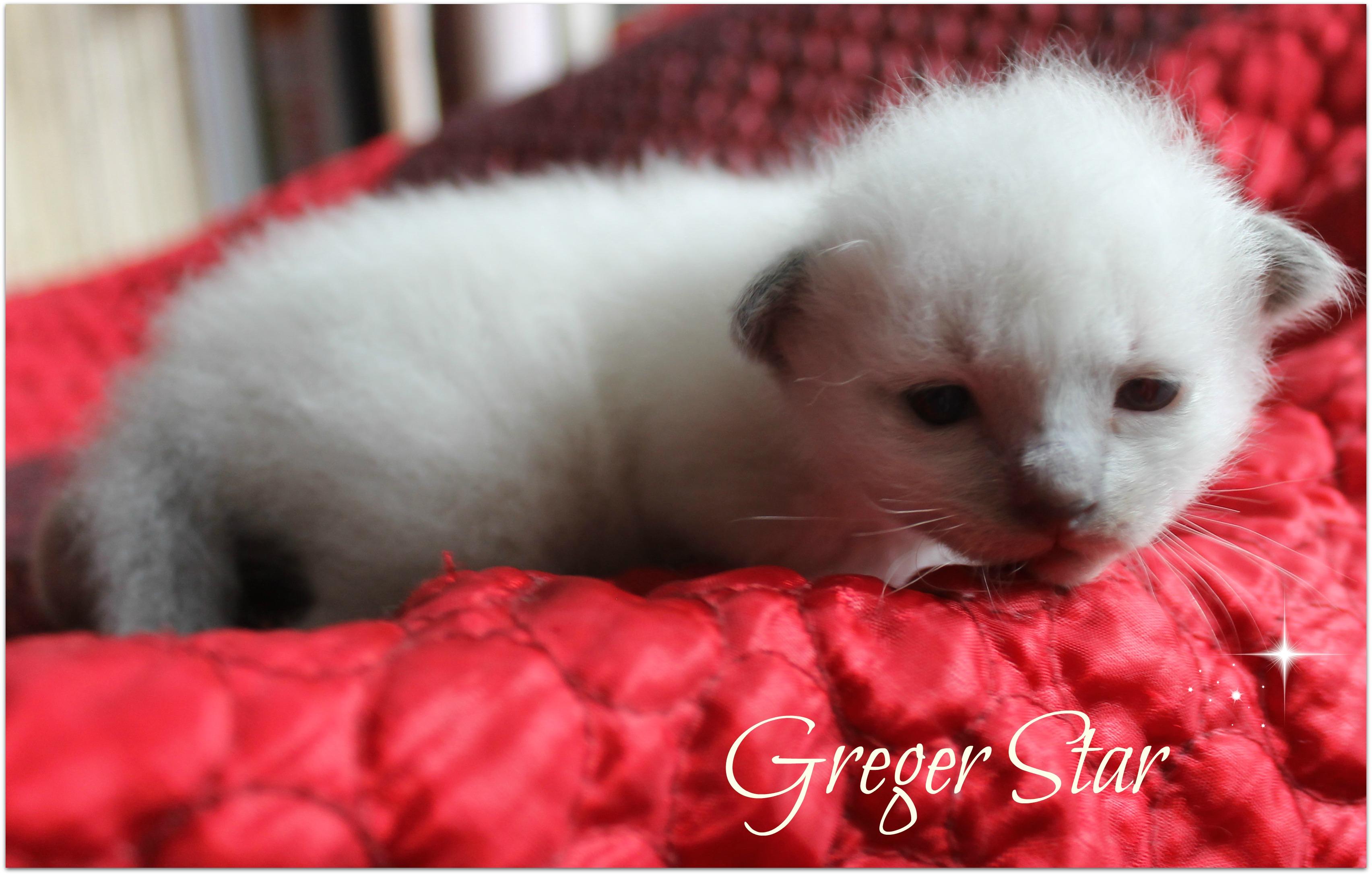 greger3