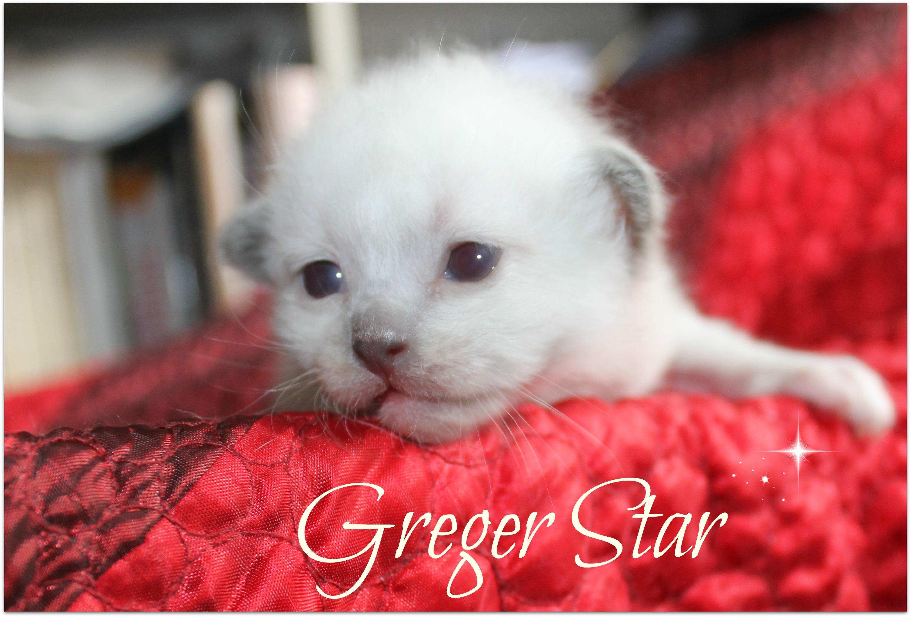 greger4