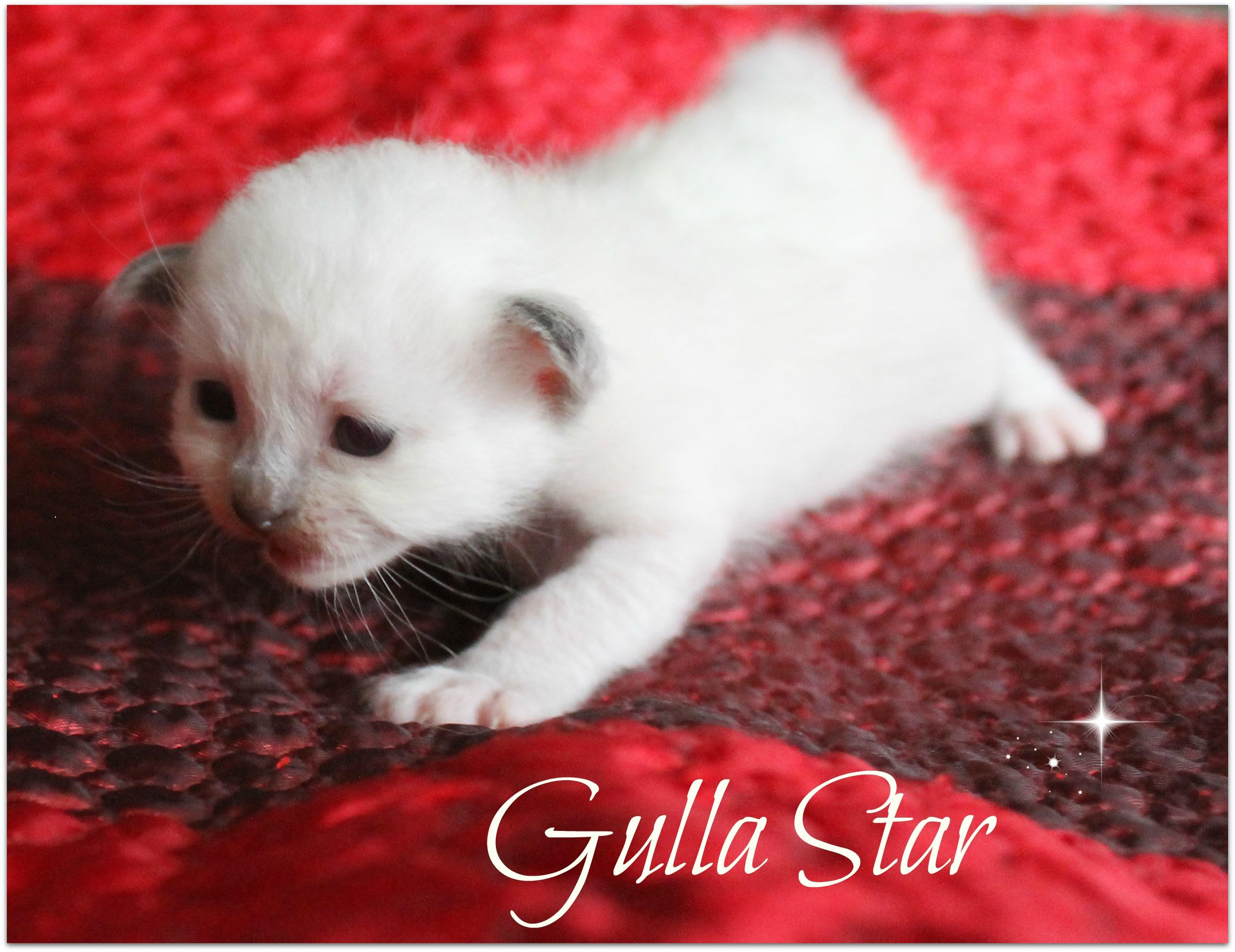 gulla3