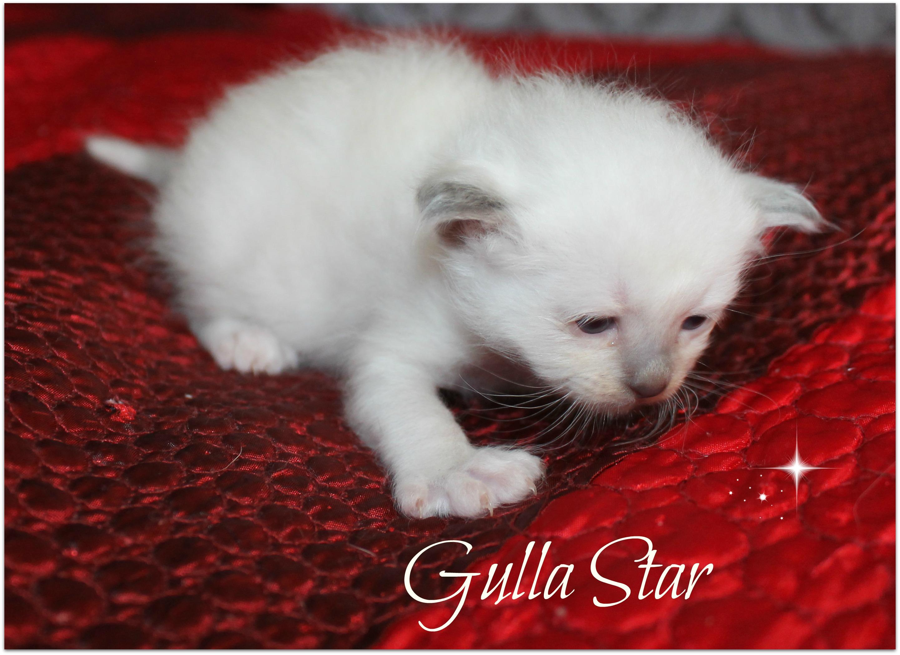 gulla3_0