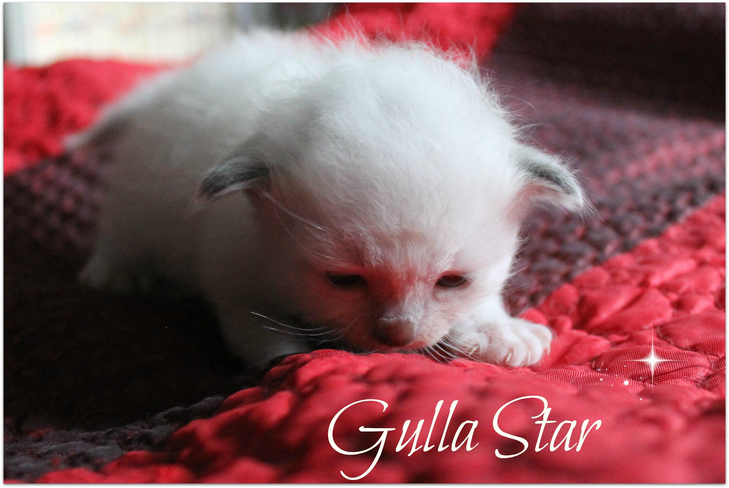 gulla4